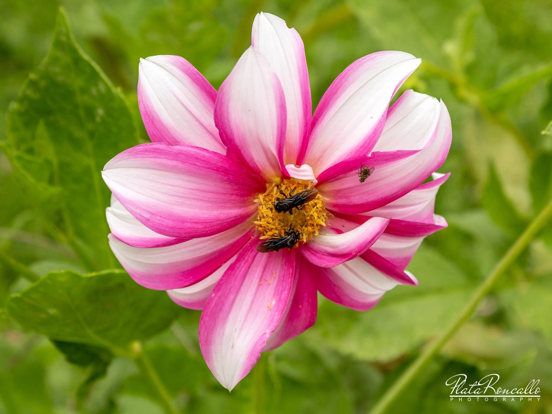 Bee Aware by PlataRoncallo