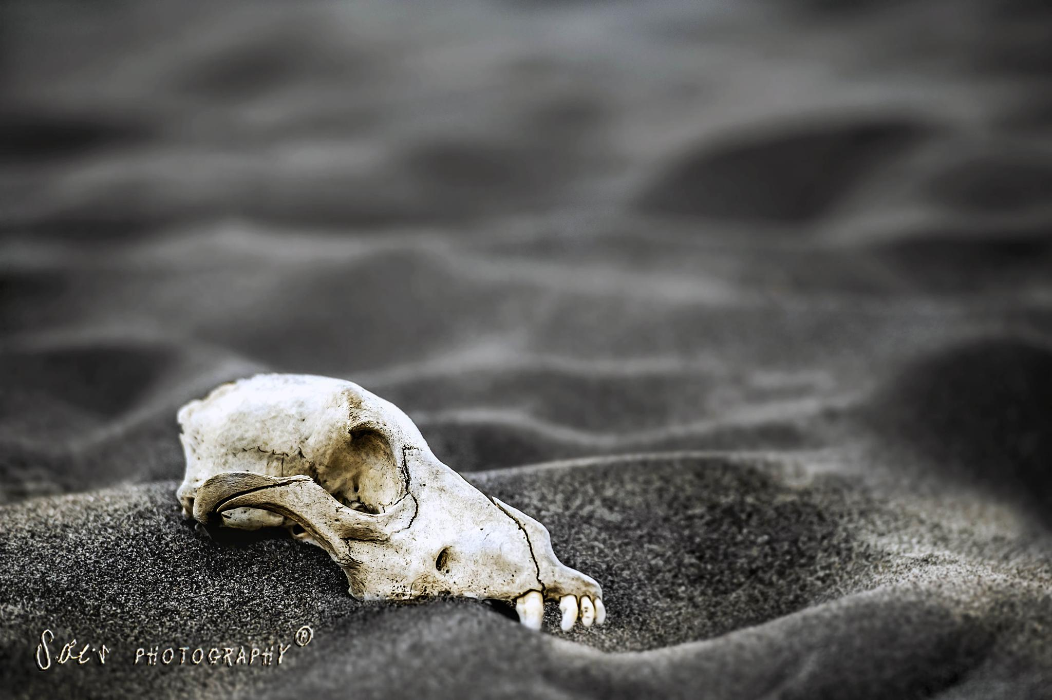 DUST & BONES by Susilo
