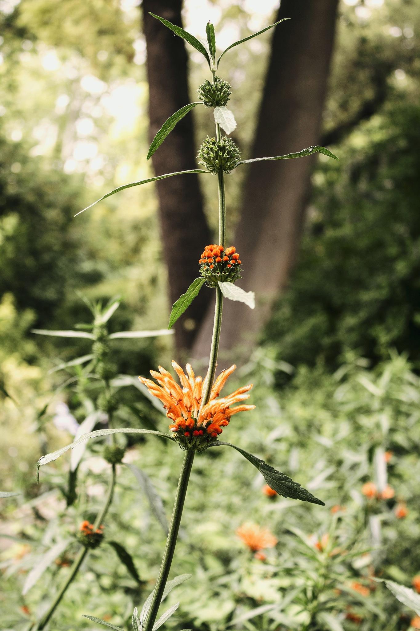 Botanic garden. by Alba Bosch
