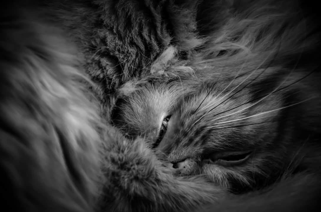 sleepy by Antti Loiske