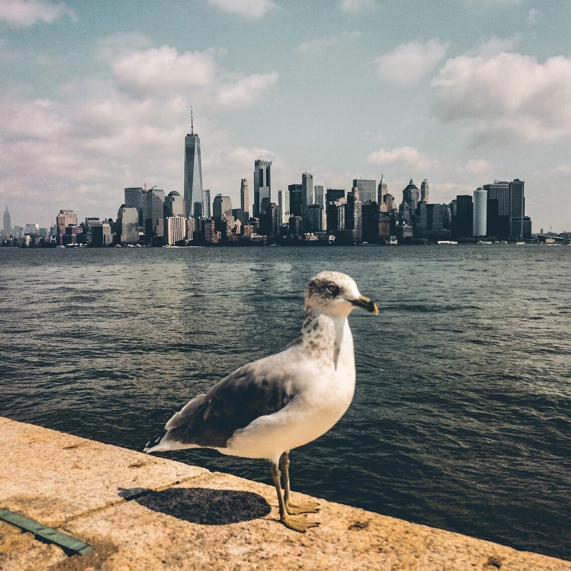 New York by Veronika Veseleniova
