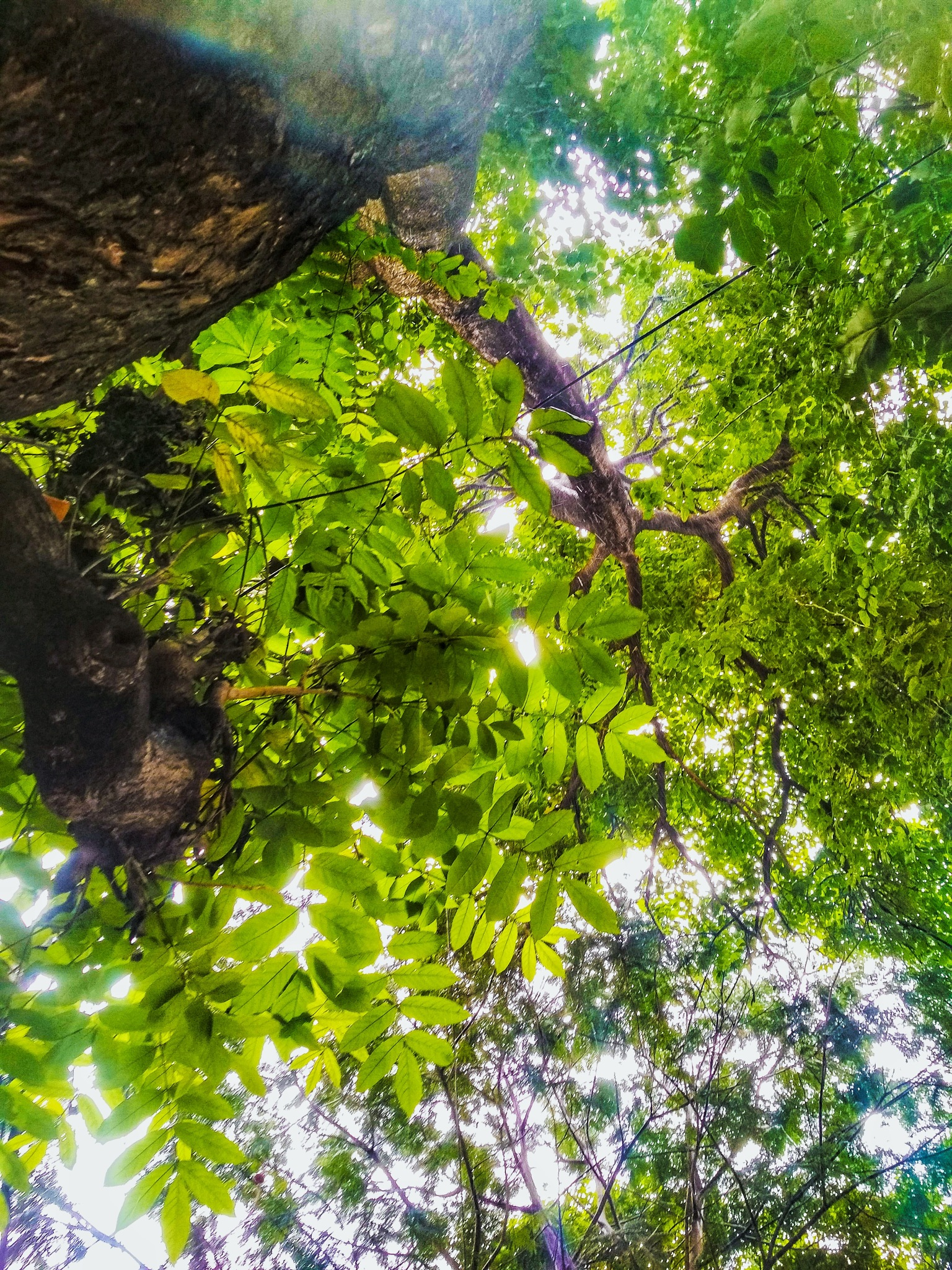 greenry  by Abhilash Mon