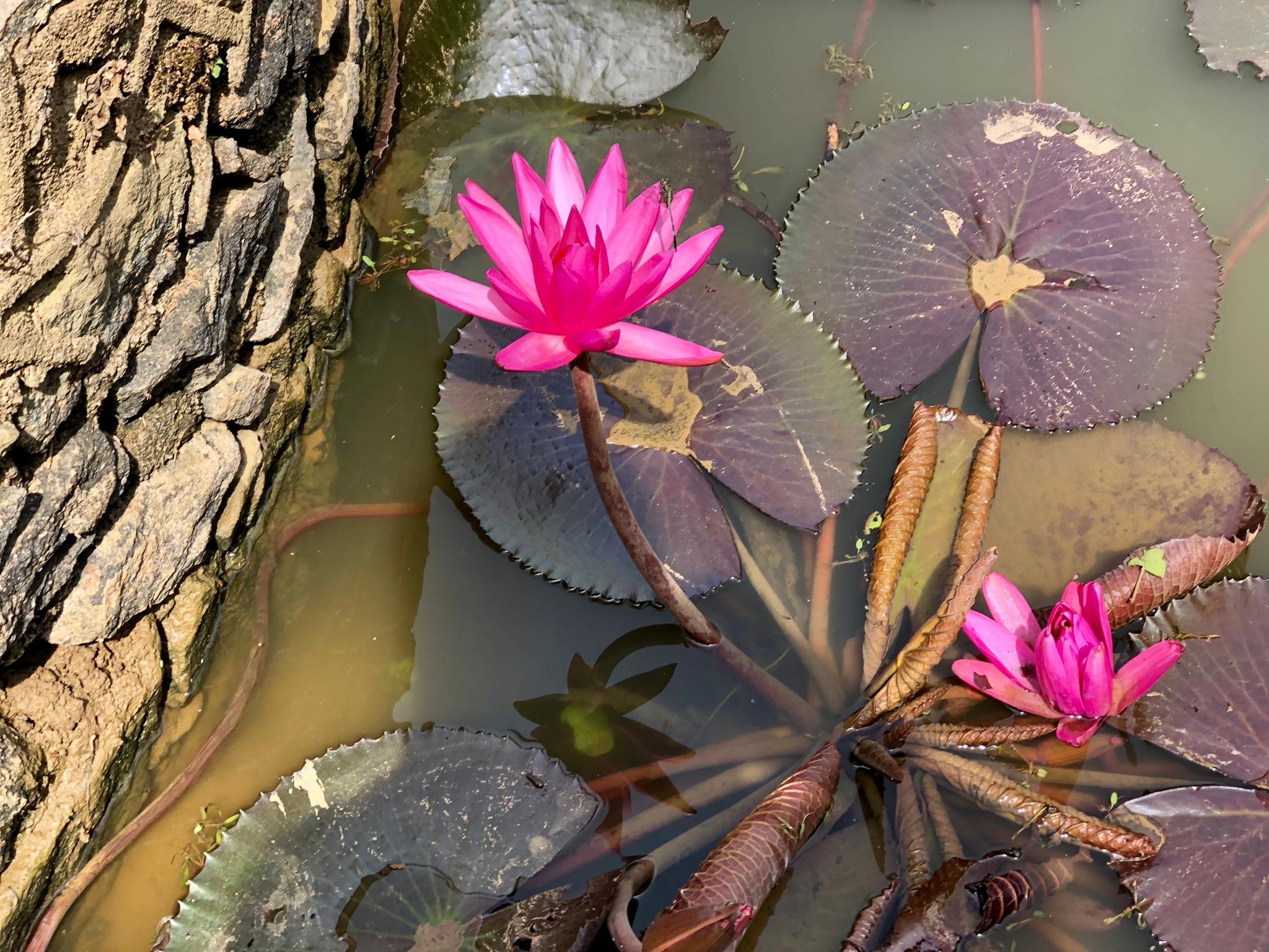 Flowers by Wil Ponsioen