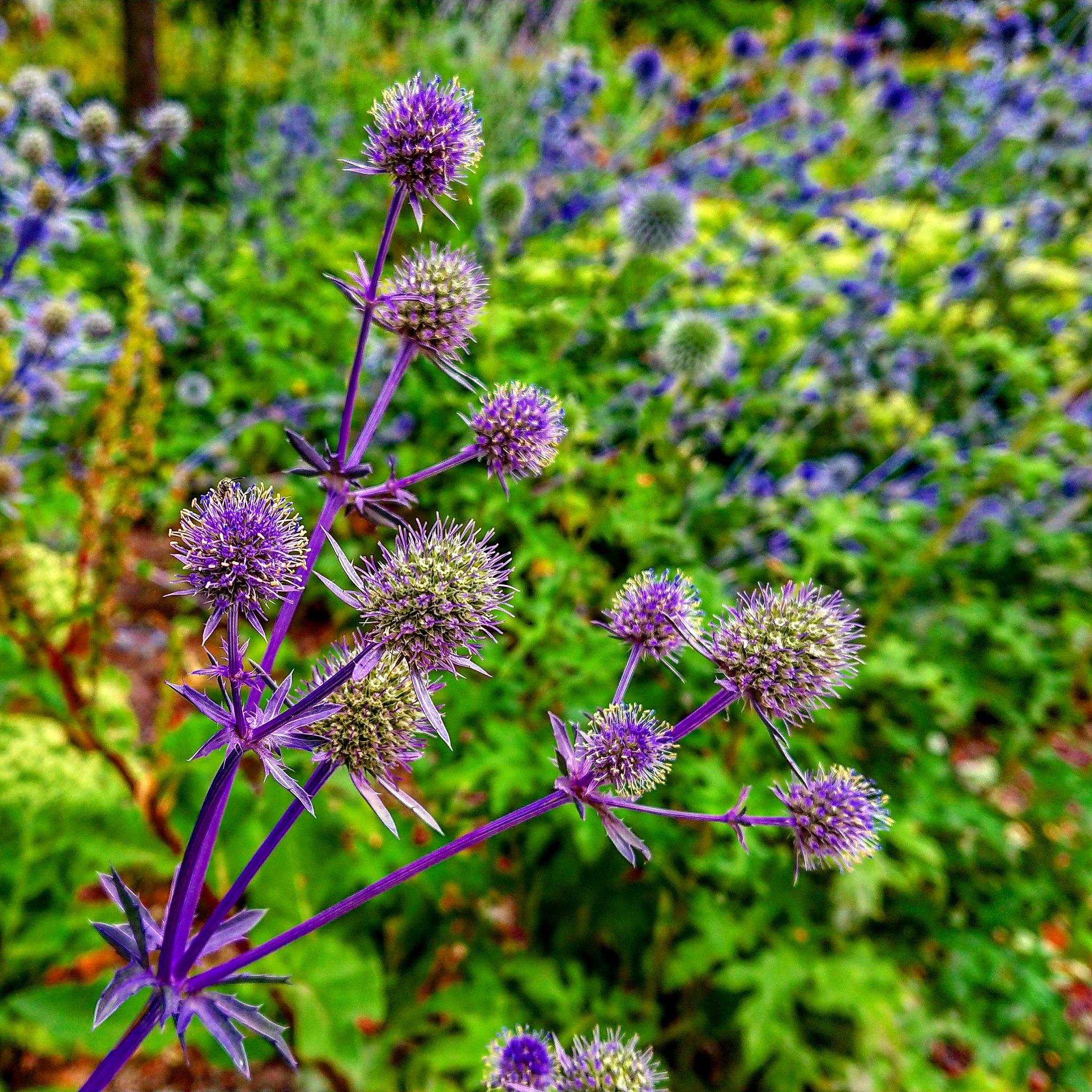 beautifully Thorns!  by Serbest Al