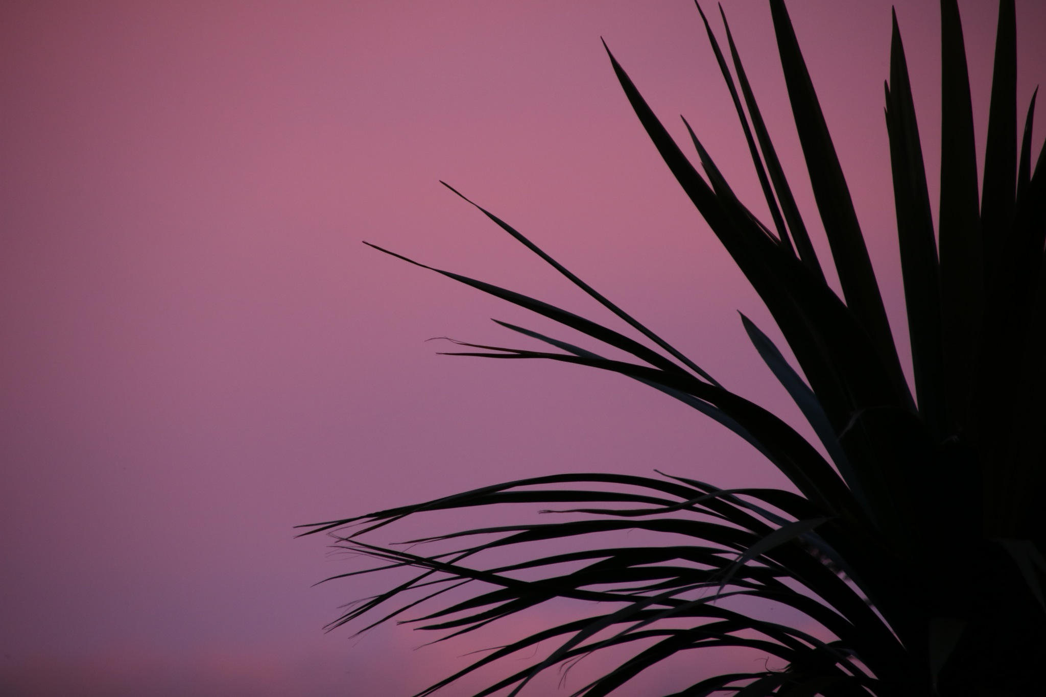Sunset and a palmtree by phxtgrphygermany