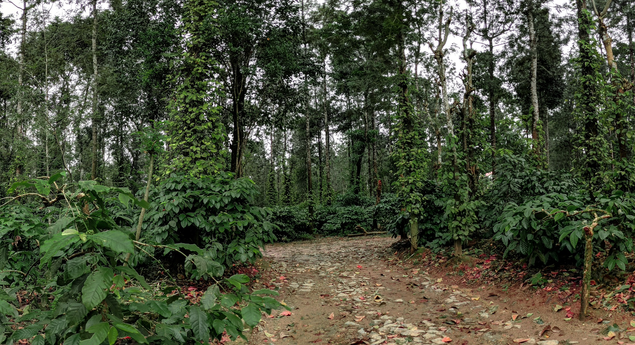out side view of home stay coorg by Jeevath