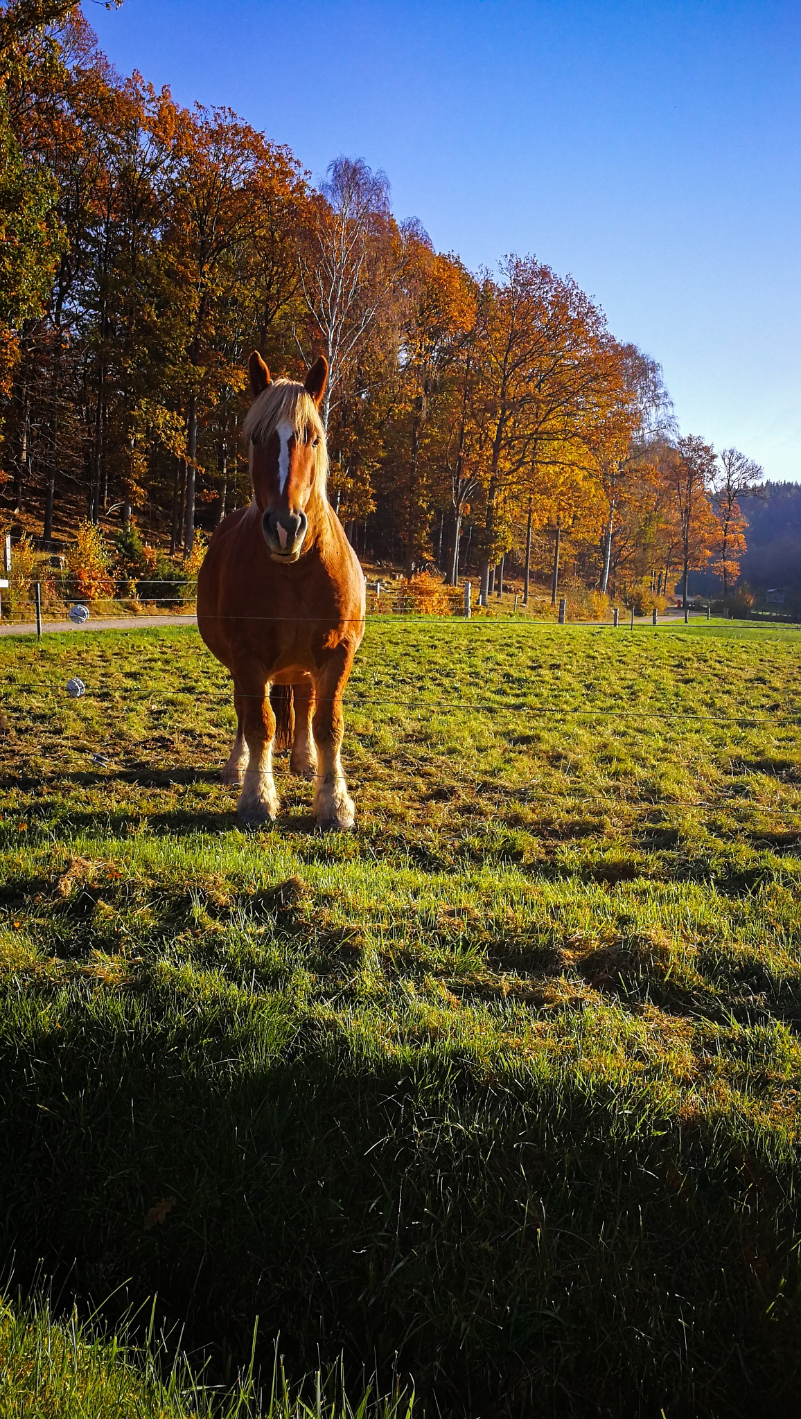 Autumn's color and a horse  by Kristin Carlsson