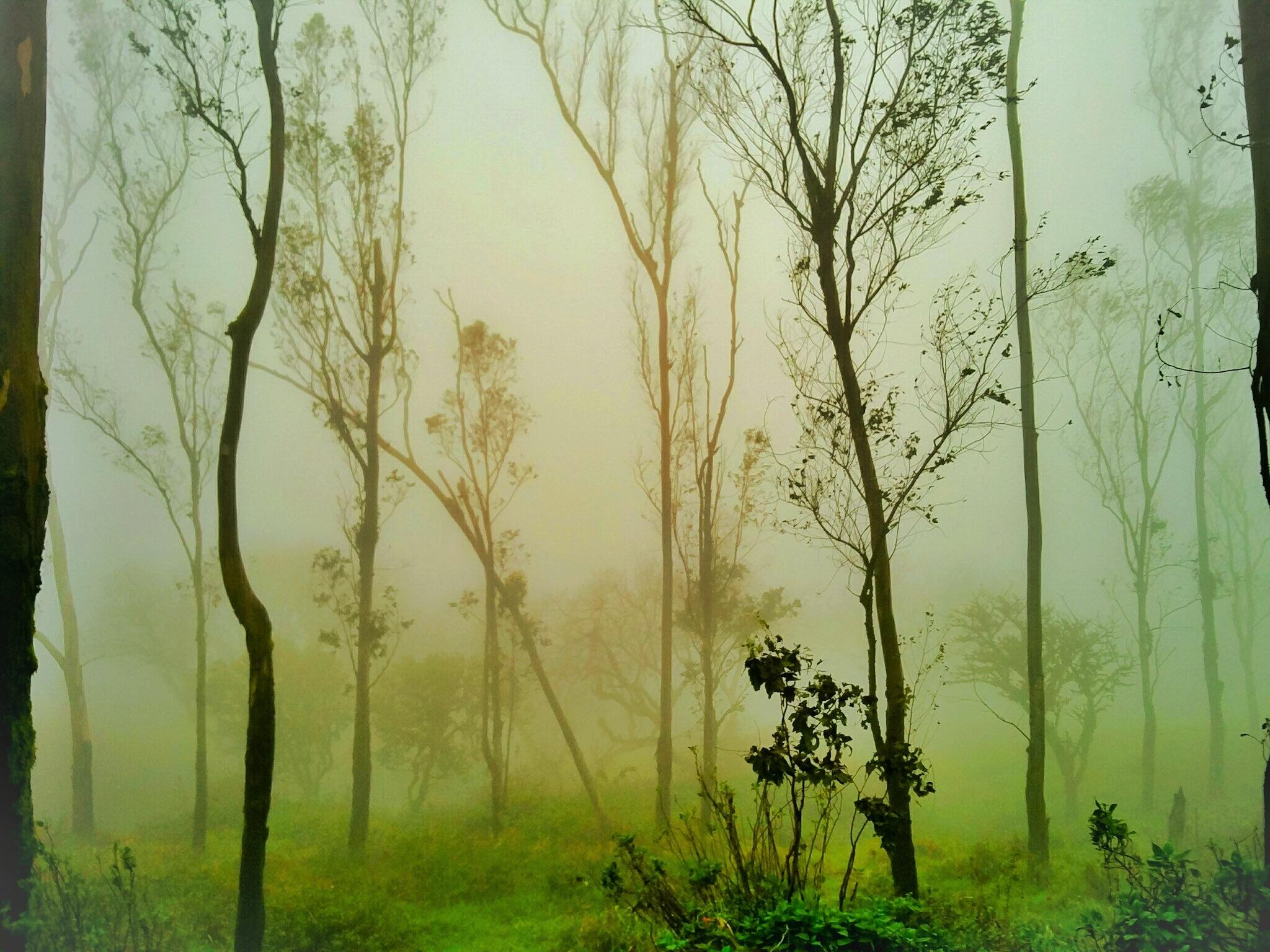 Nature by Pradeep Karthik