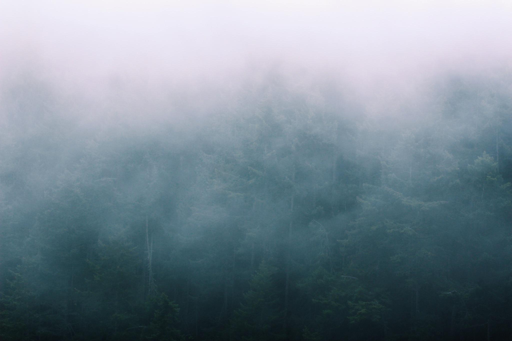 Into the fog  by Ana_Alexandra