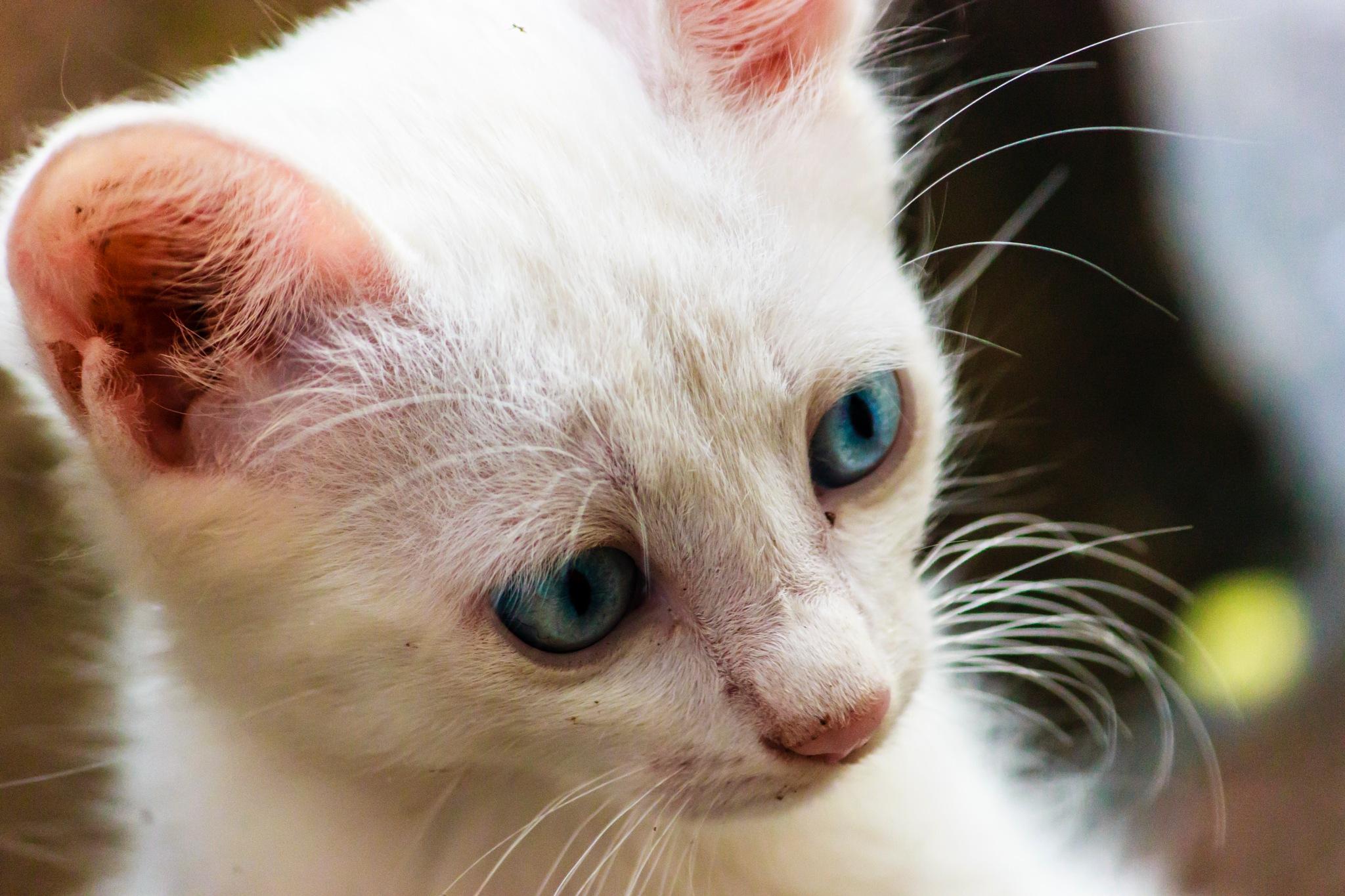 Cute Kitten by Shilpa M B