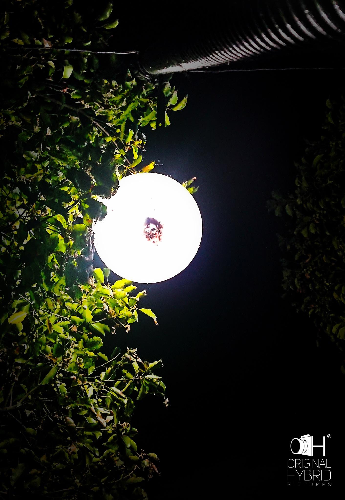 LIGHTS by Himanshu Lal