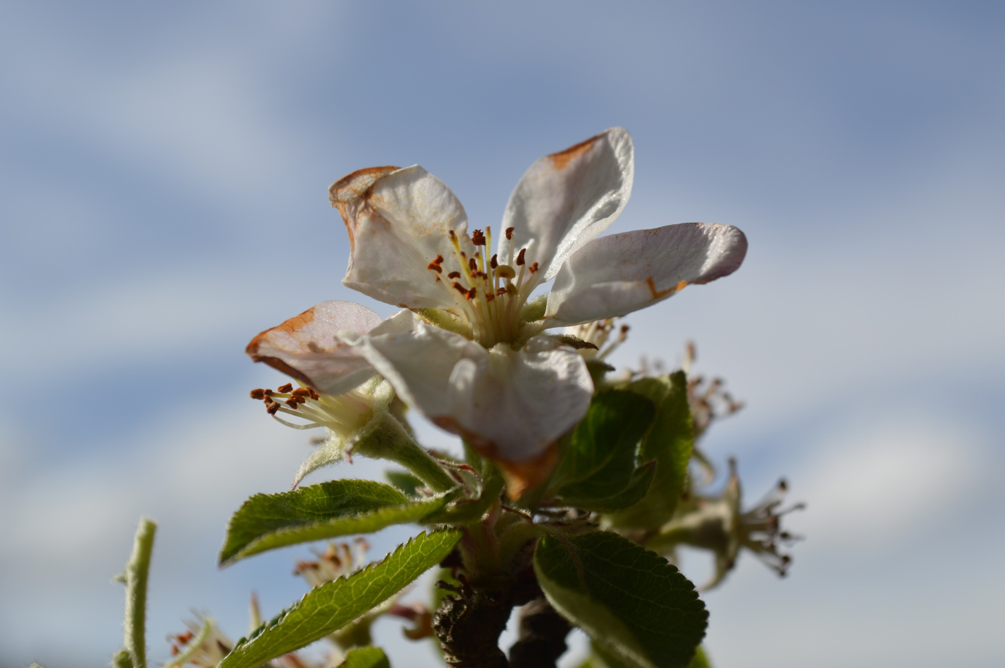 Flower Boom by opticshots3