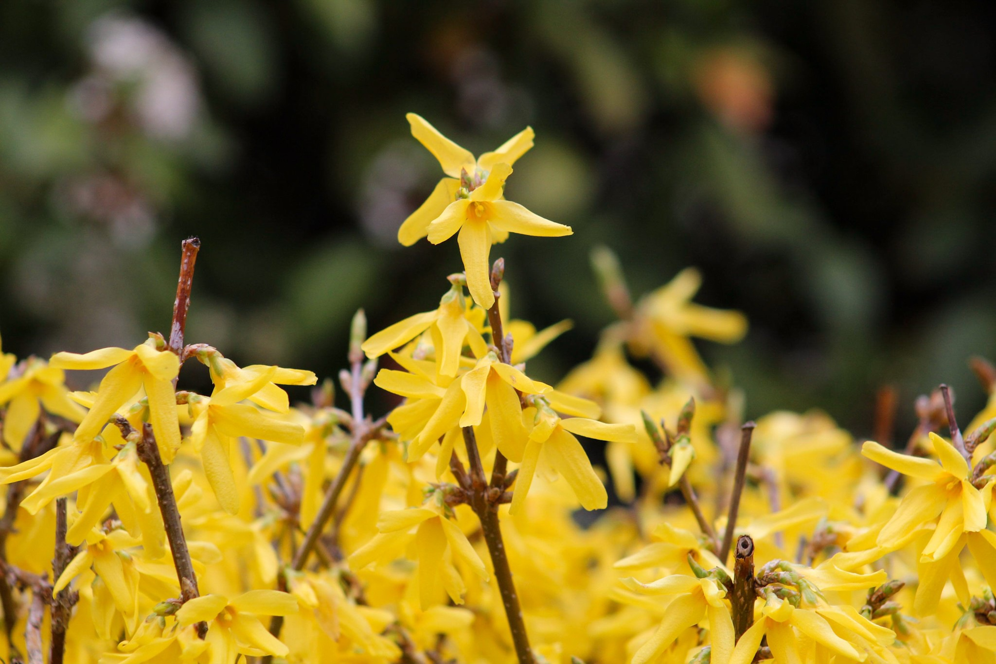 yellow flowers  by Nelly Dupuydenus