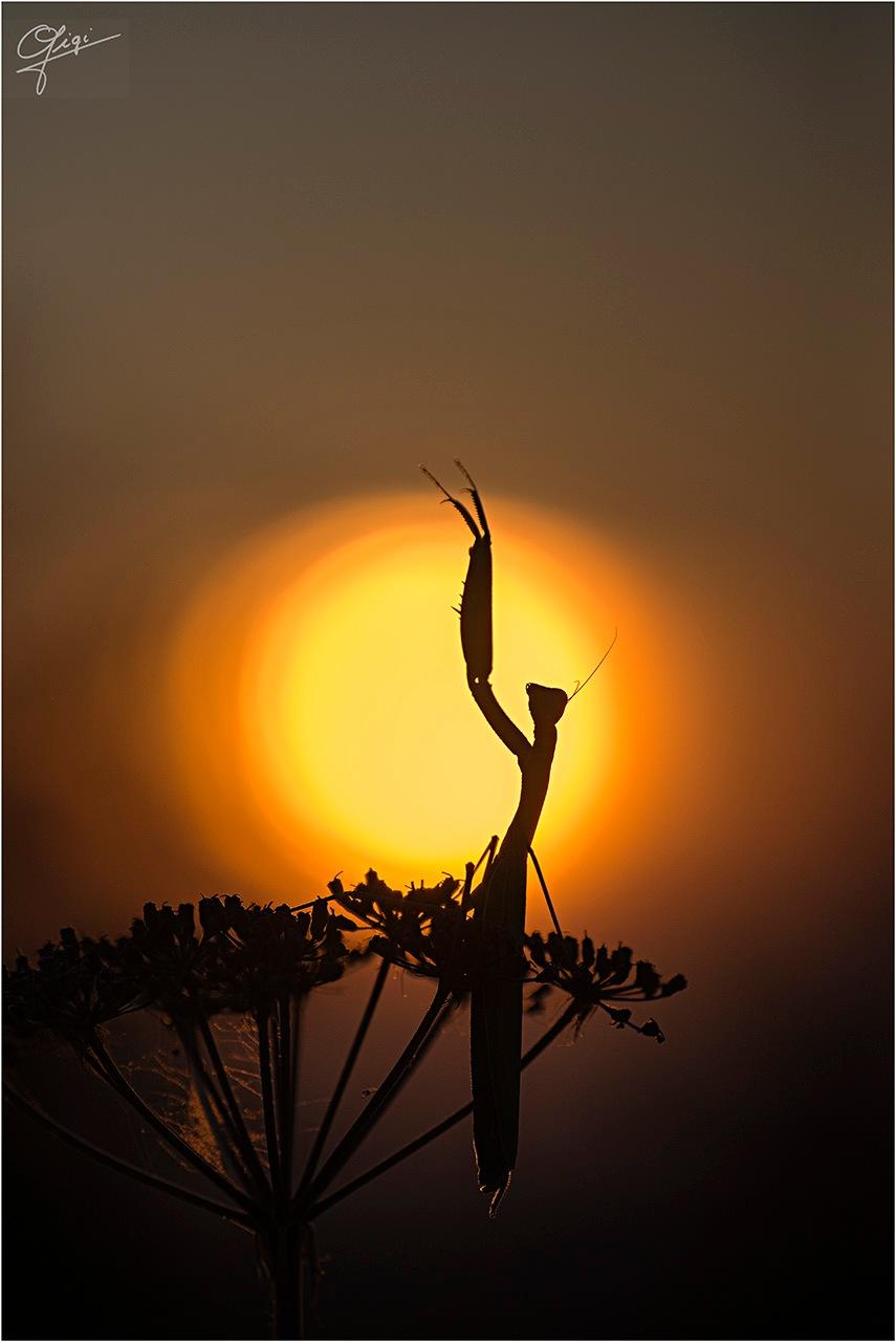 In the sun by Gigi Gallone
