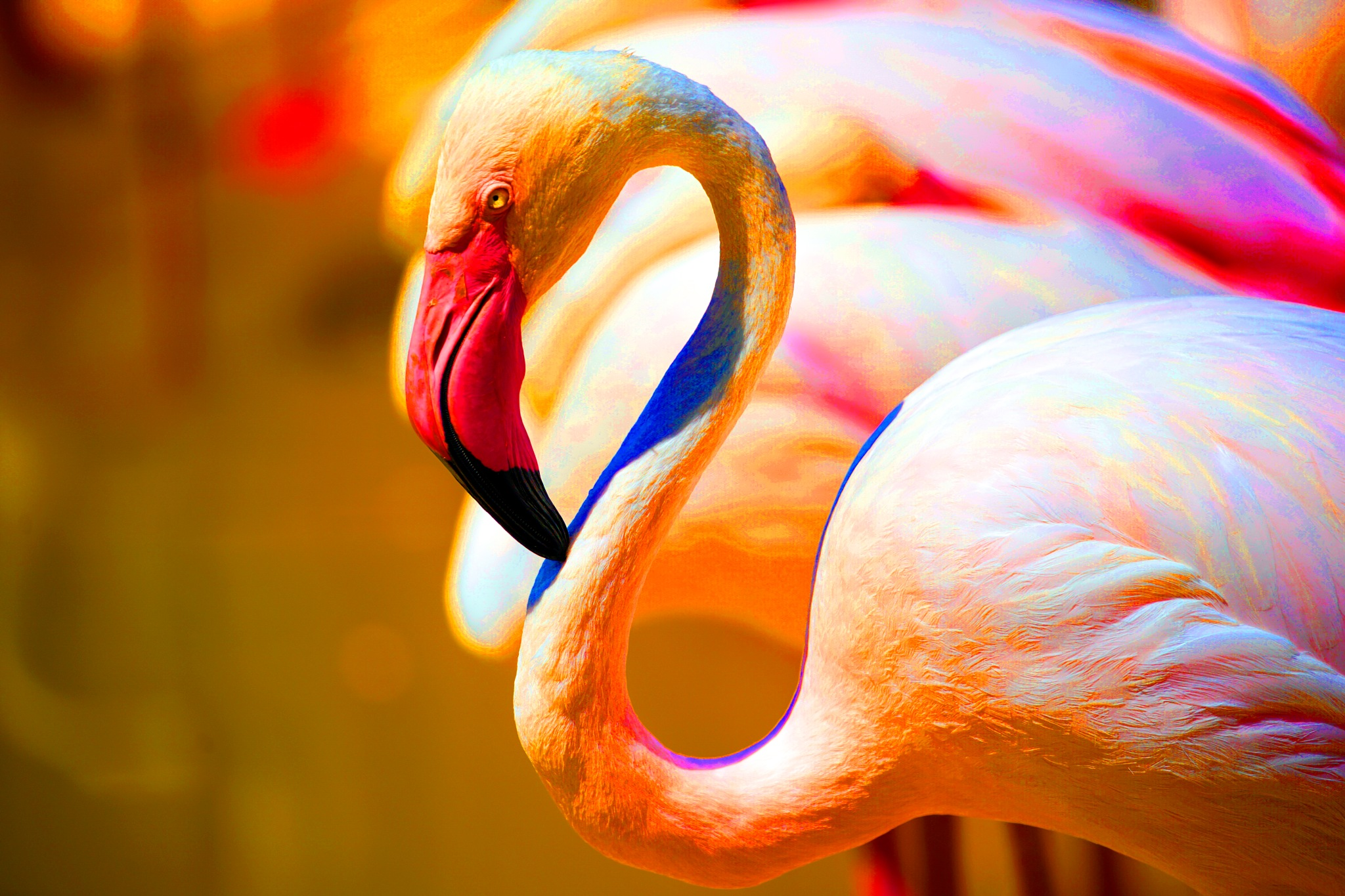Flamingos HDR by Terry R. Stahly