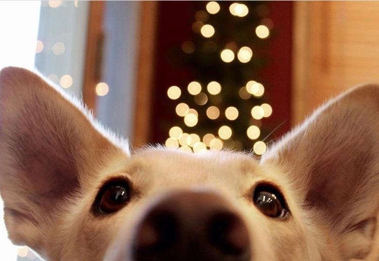 Puppy Eyes by Sophie Winckler