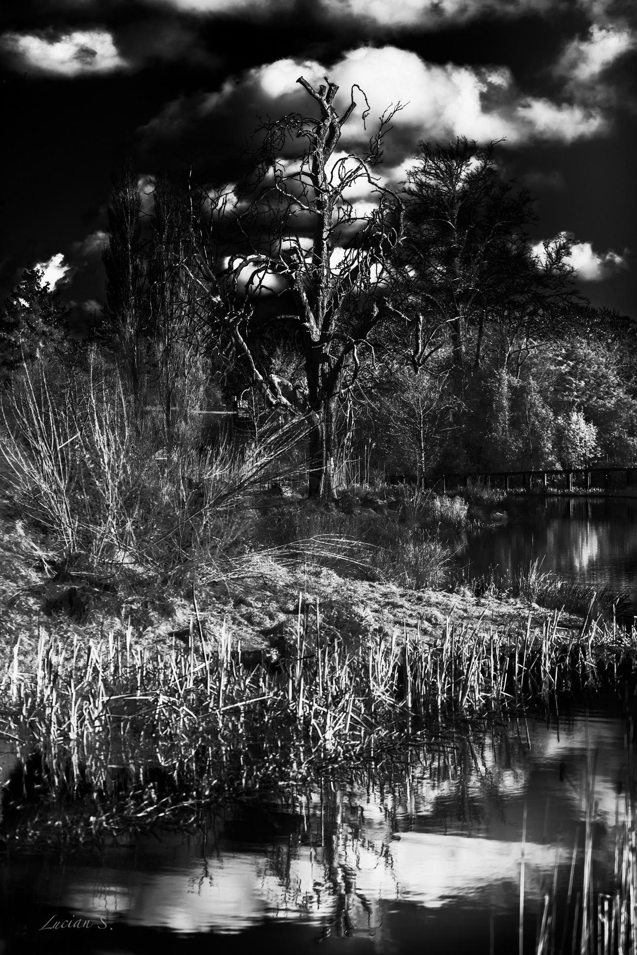 Photo in Landscape #tree #water #reflection #creative #places #travel #canon5dm4 #black and white