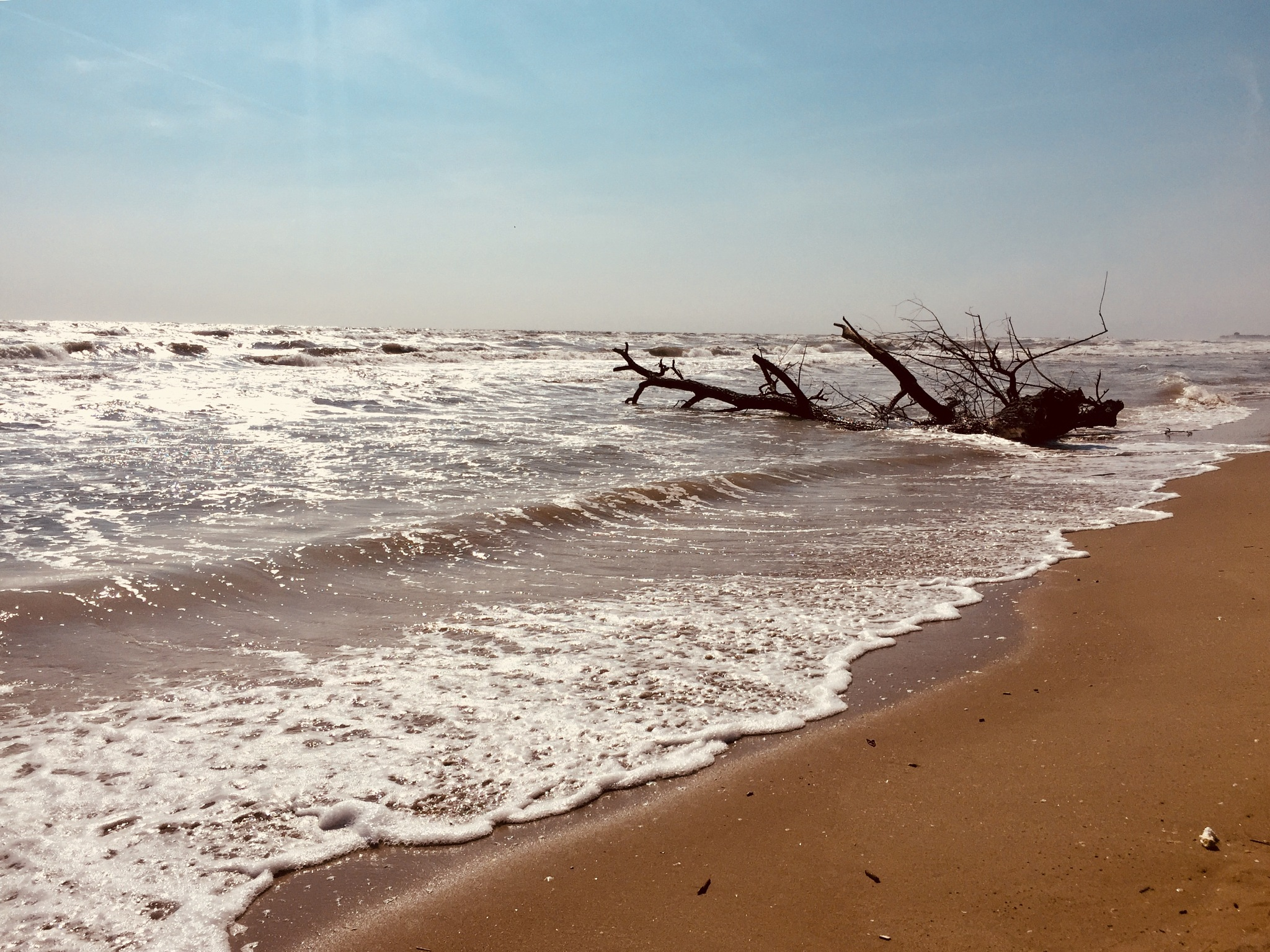 sea's tree by Ale Caprara