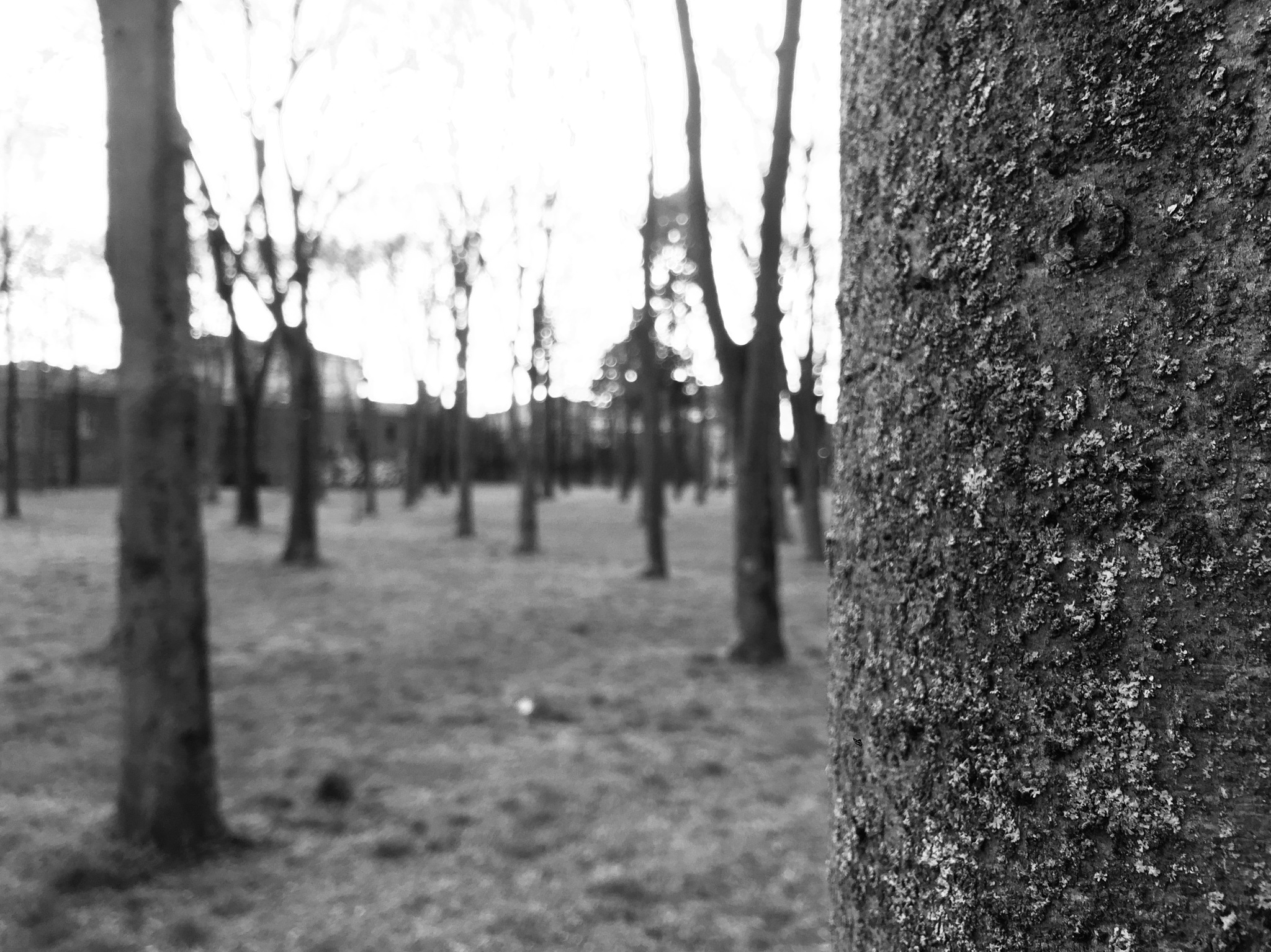 shadow tree by Ale Caprara