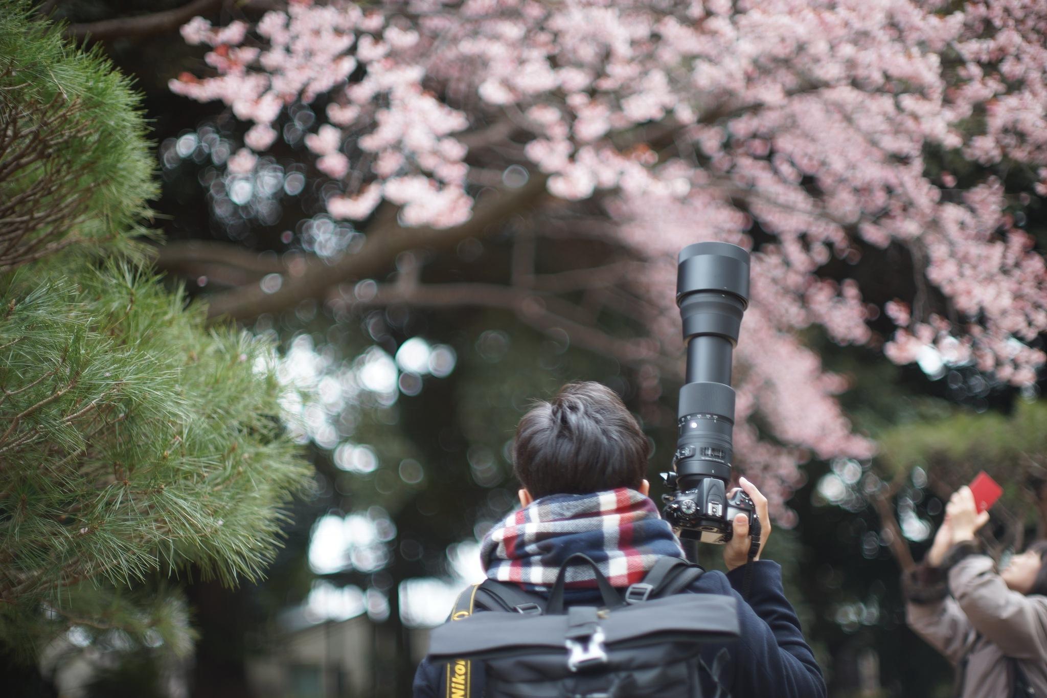 Shinjuku Cherry Blossom by Rei