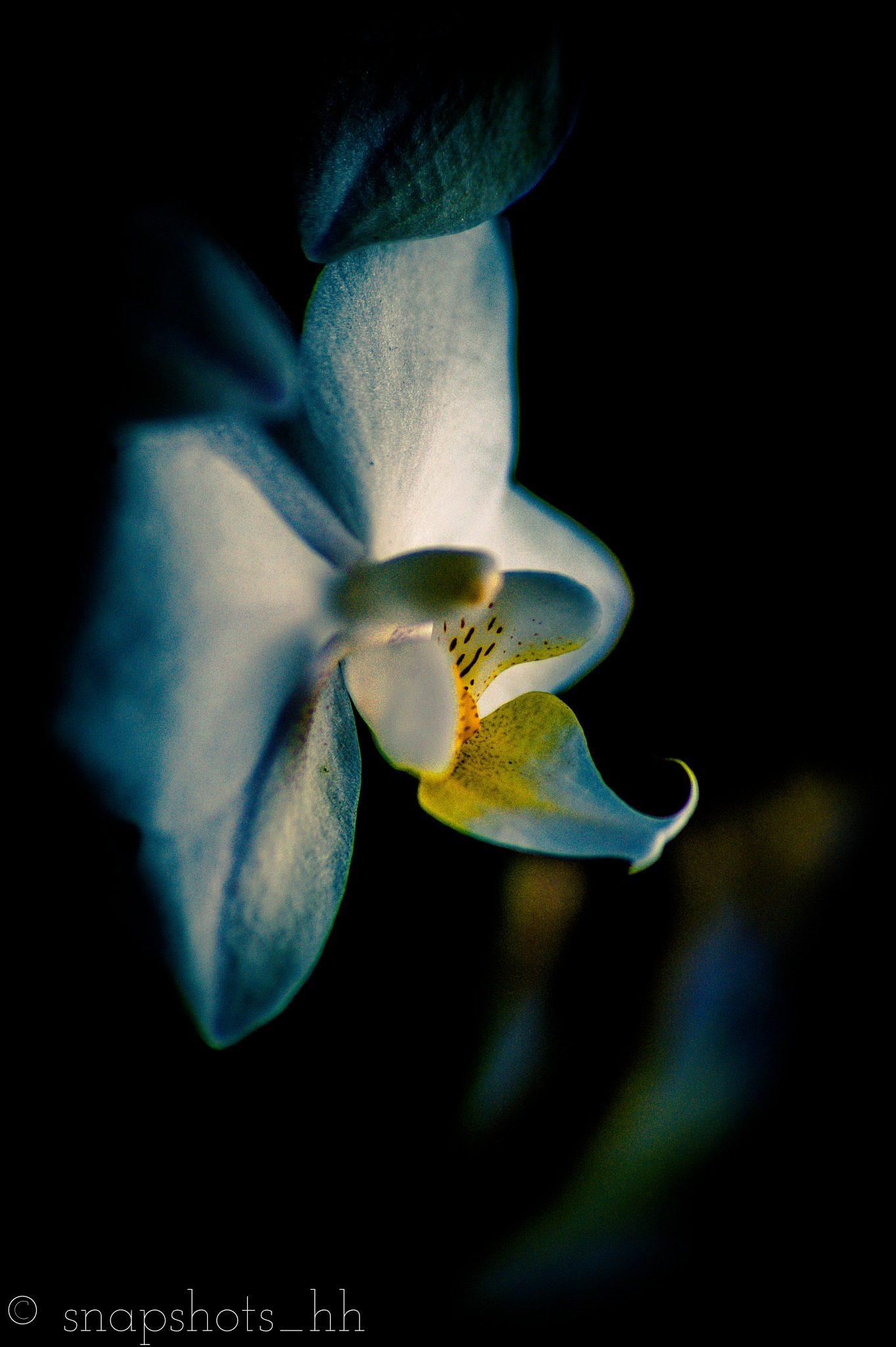 The Orchid Experiment IV by Snapshots_Hamburg