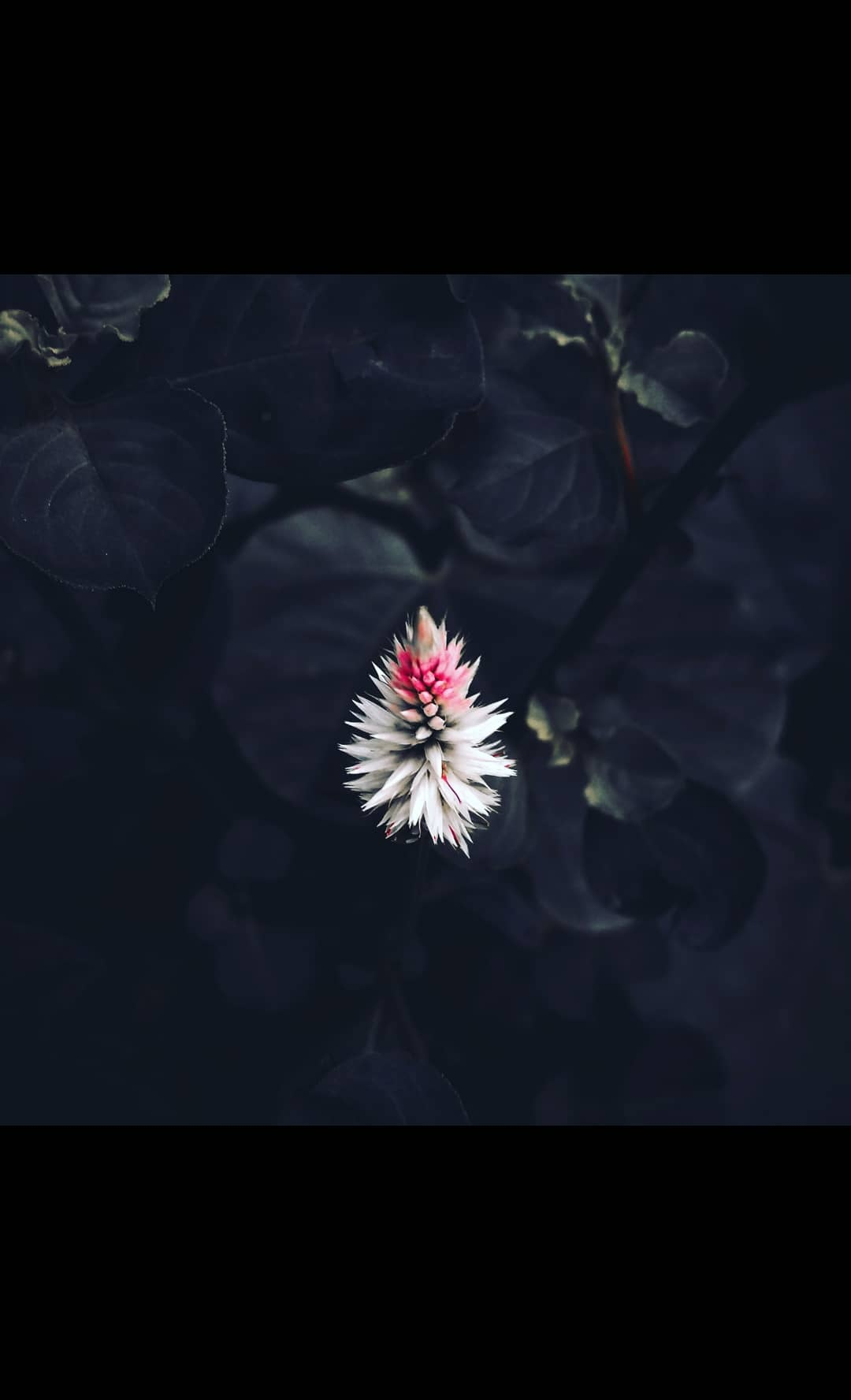 Untitled by Sidharth madhesiya