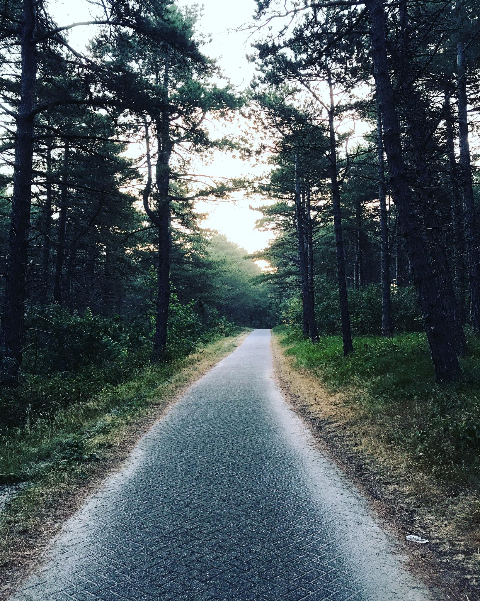 Forest walks  by Rebecca Wakabayashi