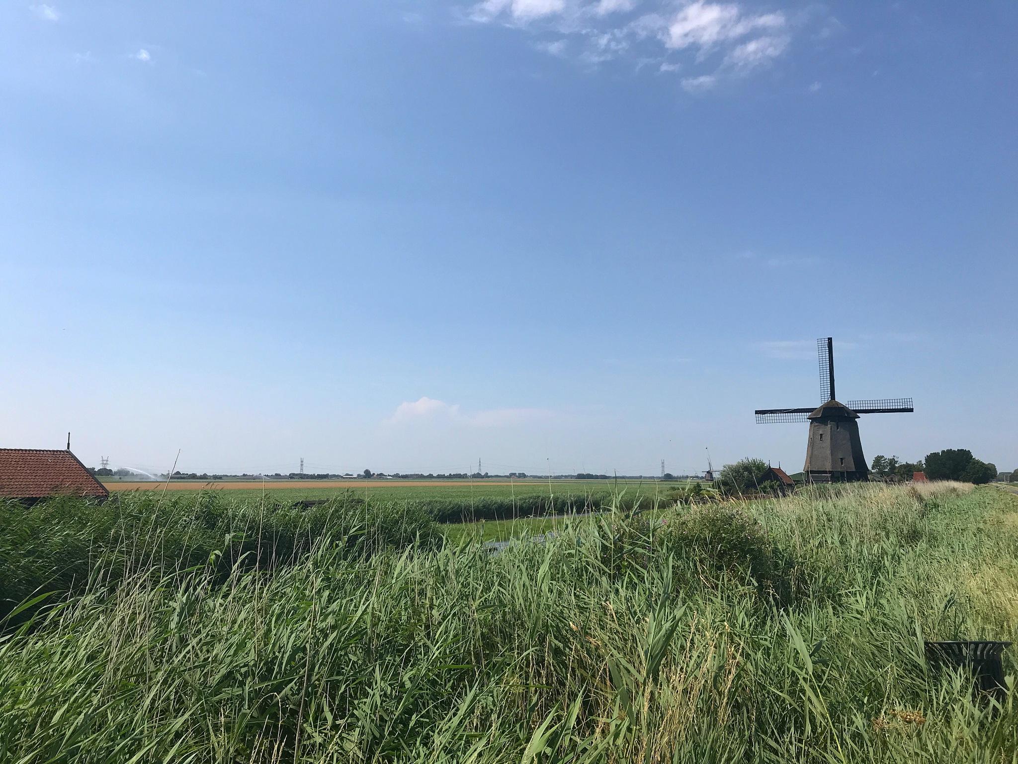 A Dutch landscape  by Rebecca Wakabayashi