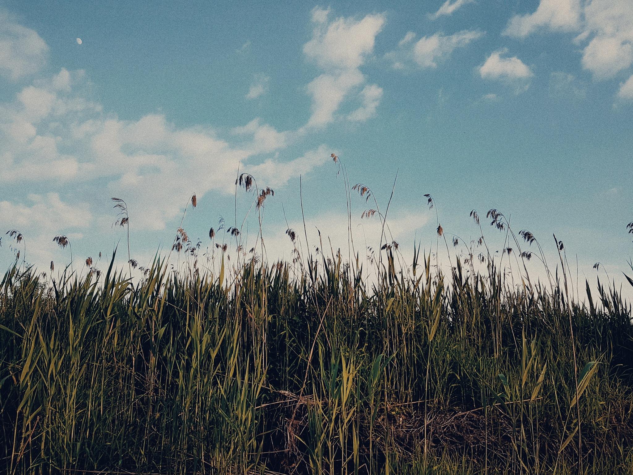 Fields Of Lithuania by Vėja Viliūnaitė
