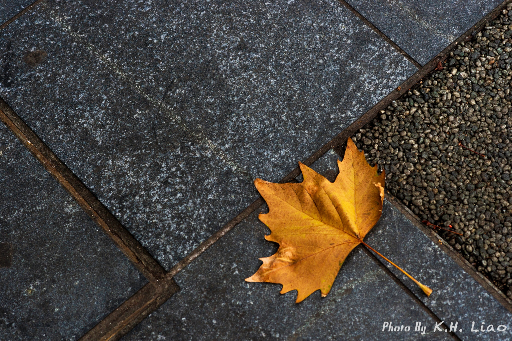Leaf by Moore Liao