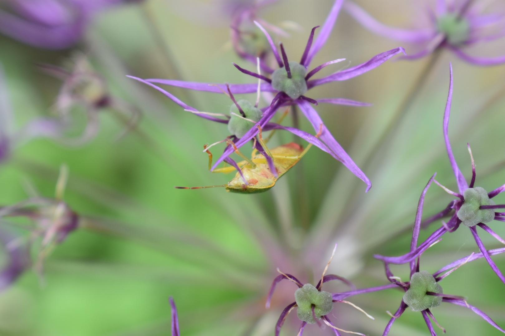 bug by rebecca mitchell