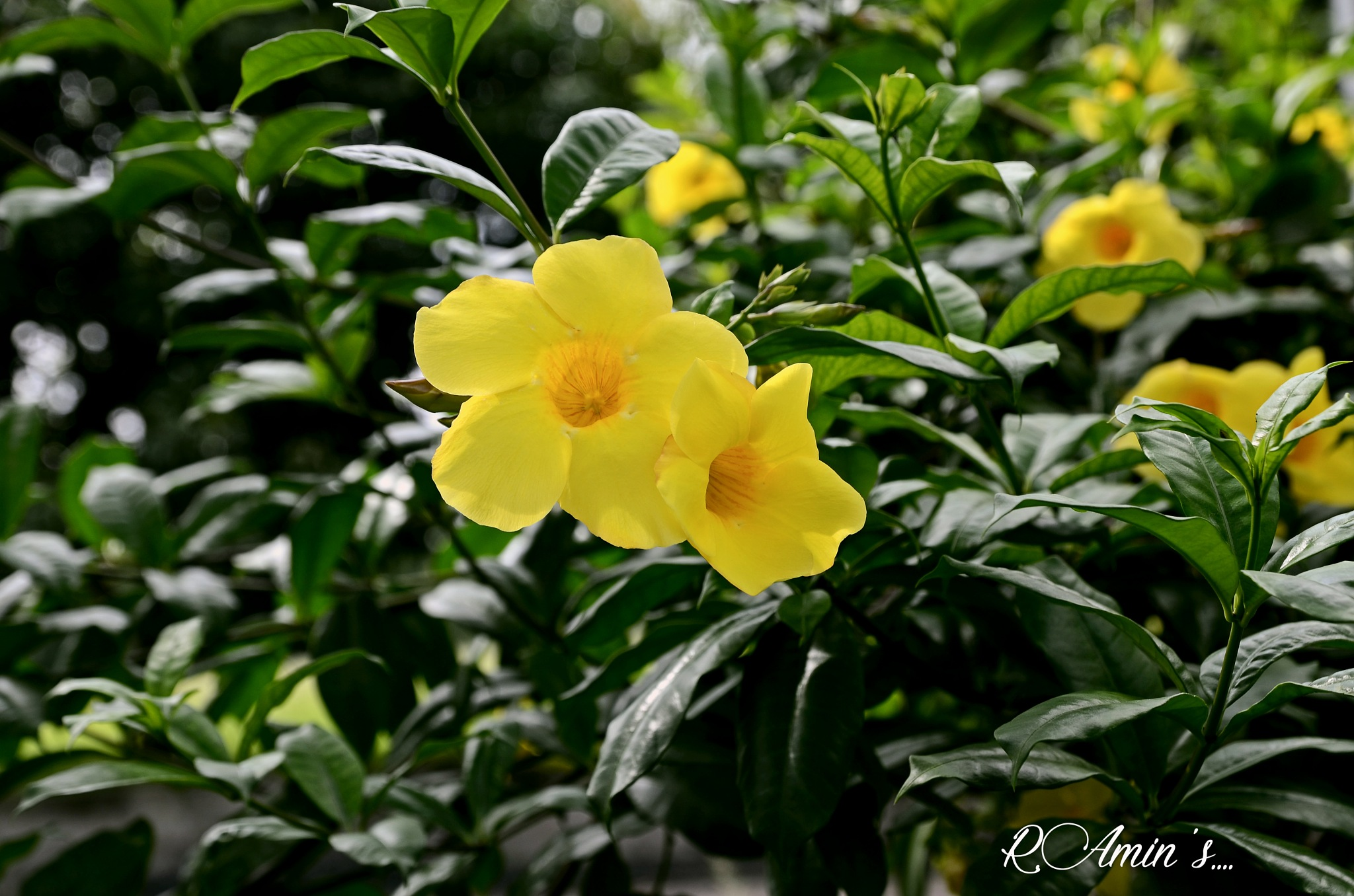 Lovely Flower  by Md. Ruhul Amin