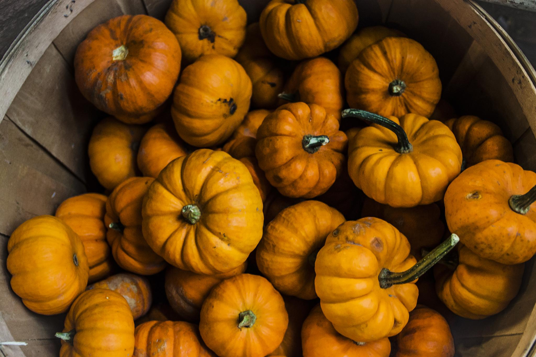 Gourds 3 - the pumpkins by Patrick Bogan
