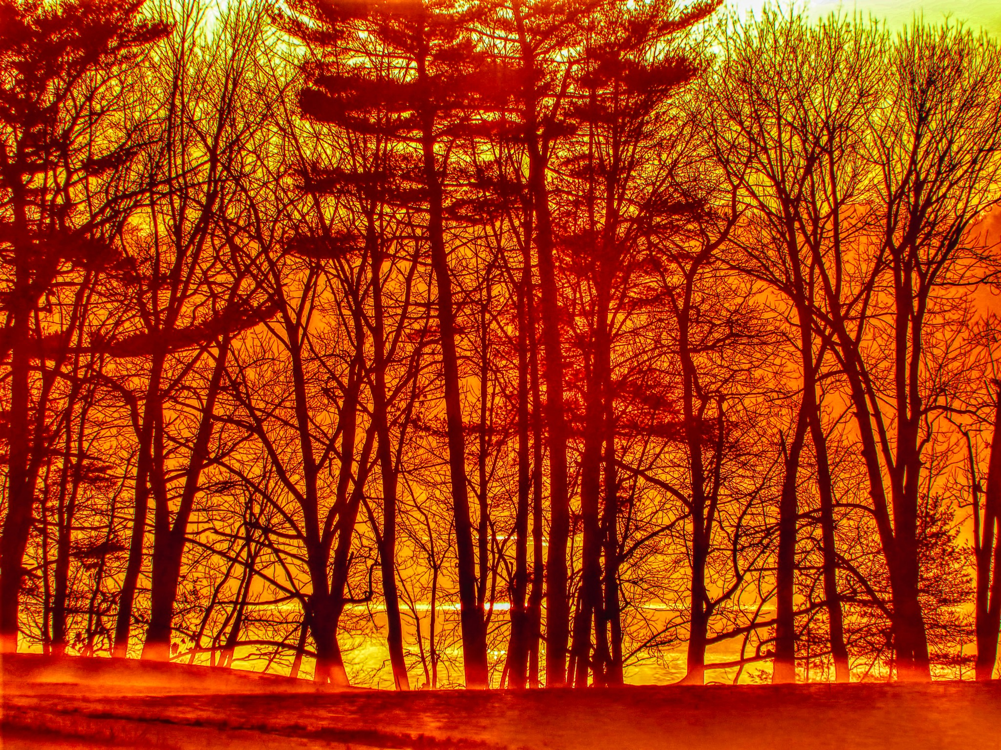 Sunset, Wolfe's Neck Woods State Park, Freeport, Maine by D. Scott Hufford