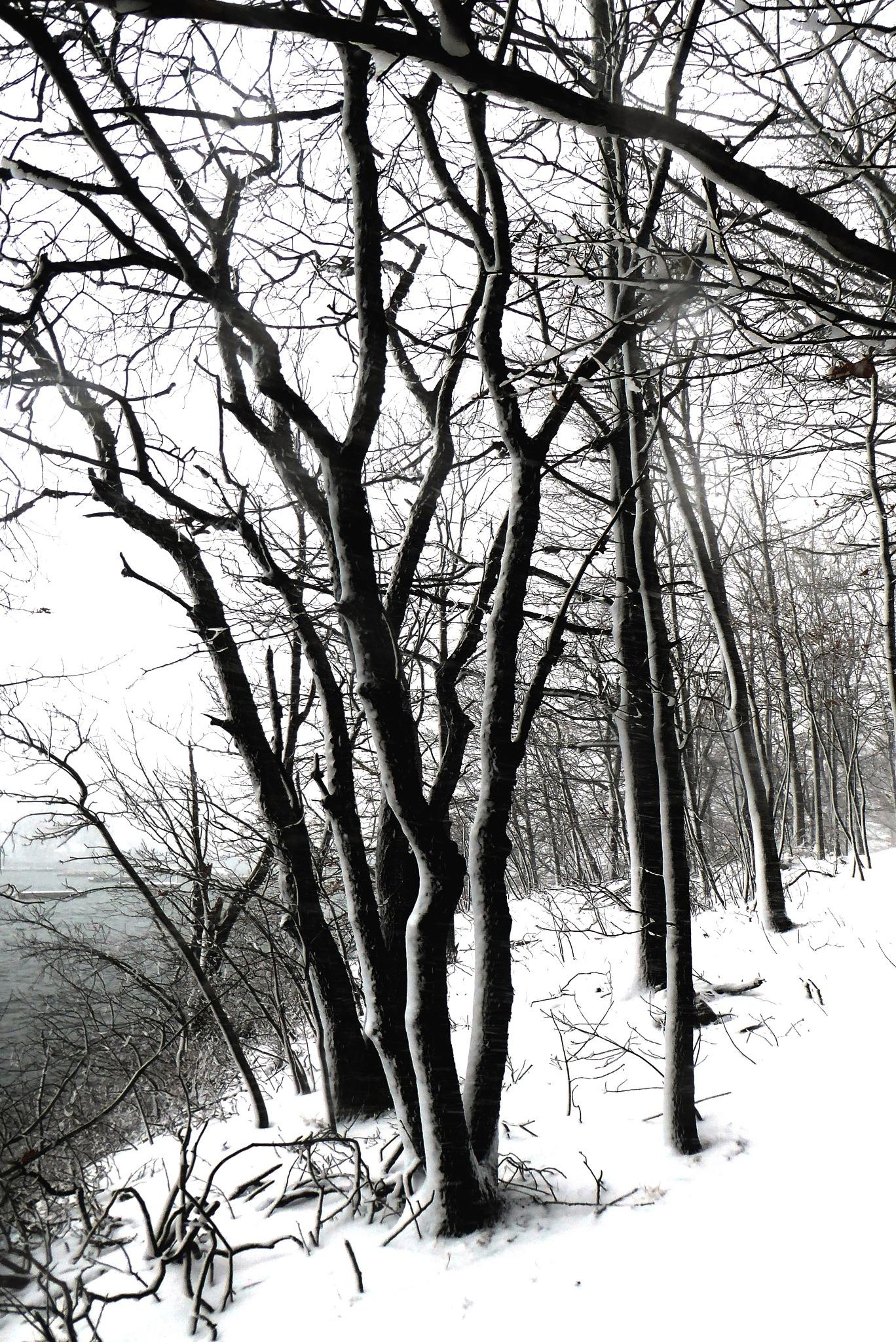 Green's Hill Winter by D. Scott Hufford