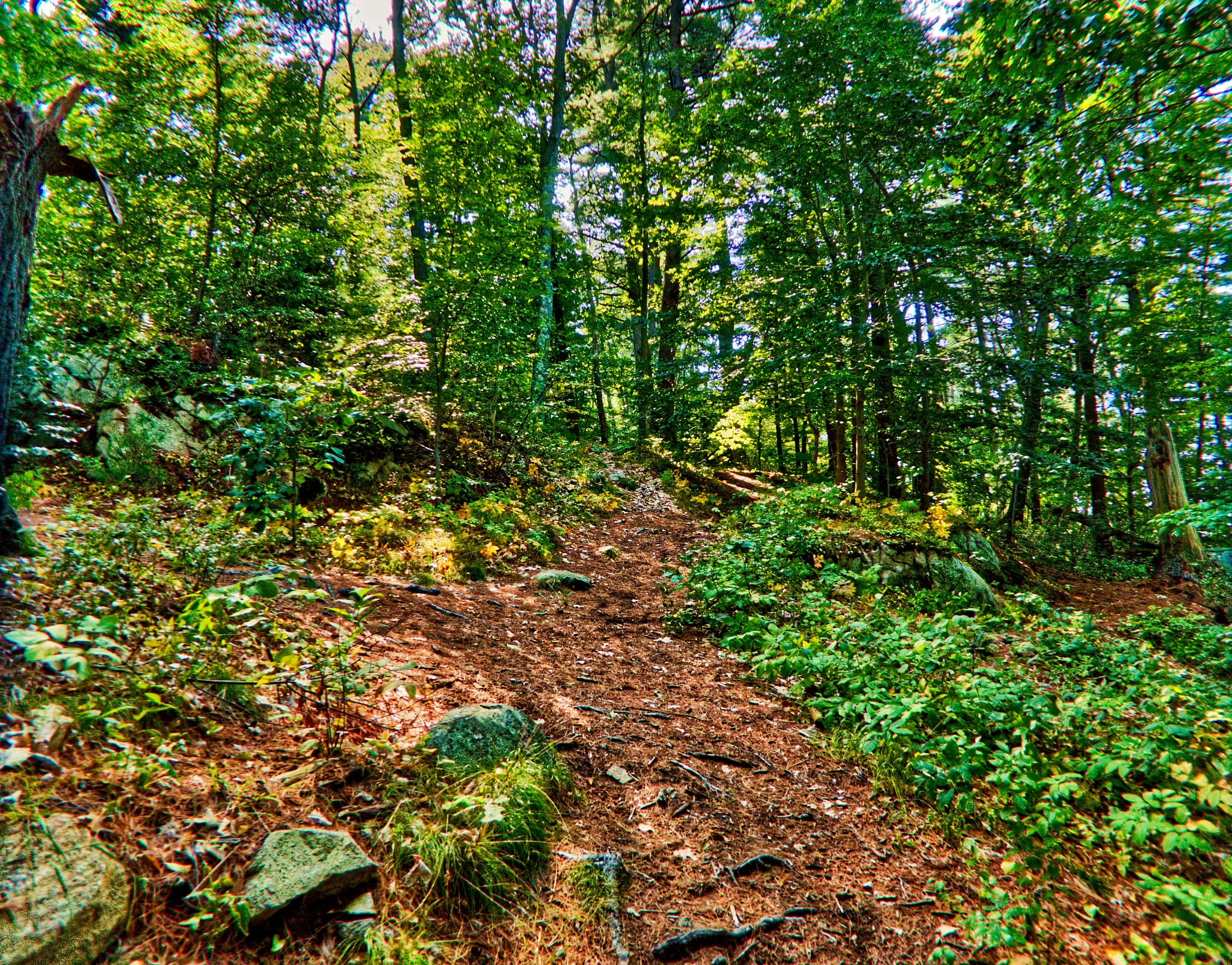 Bald Hill Conservation Area by D. Scott Hufford