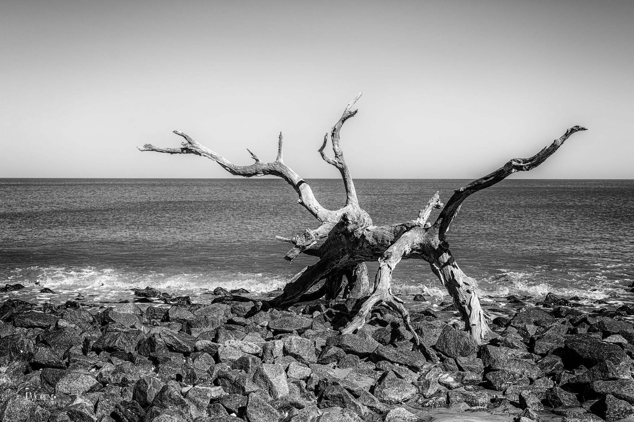 Driftwood Beach by Jesus Moreno