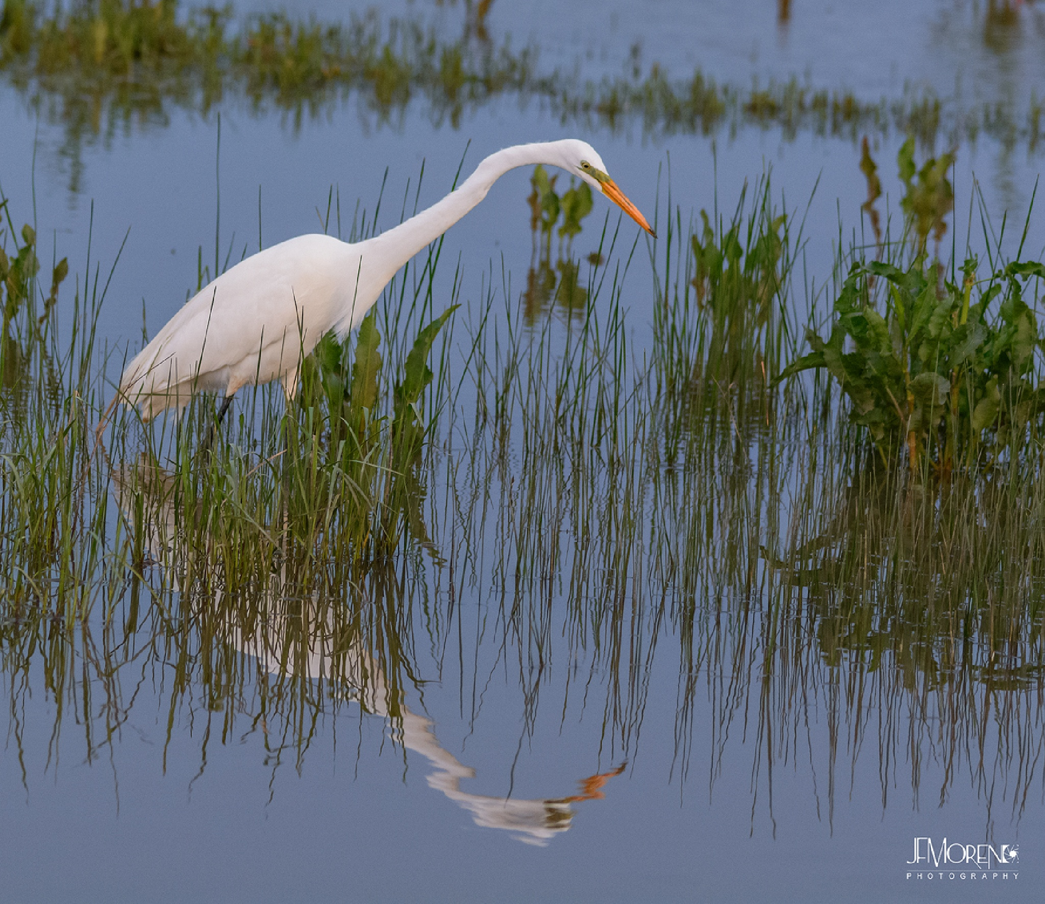 Mirror mirror on the...pond? by Jesus Moreno