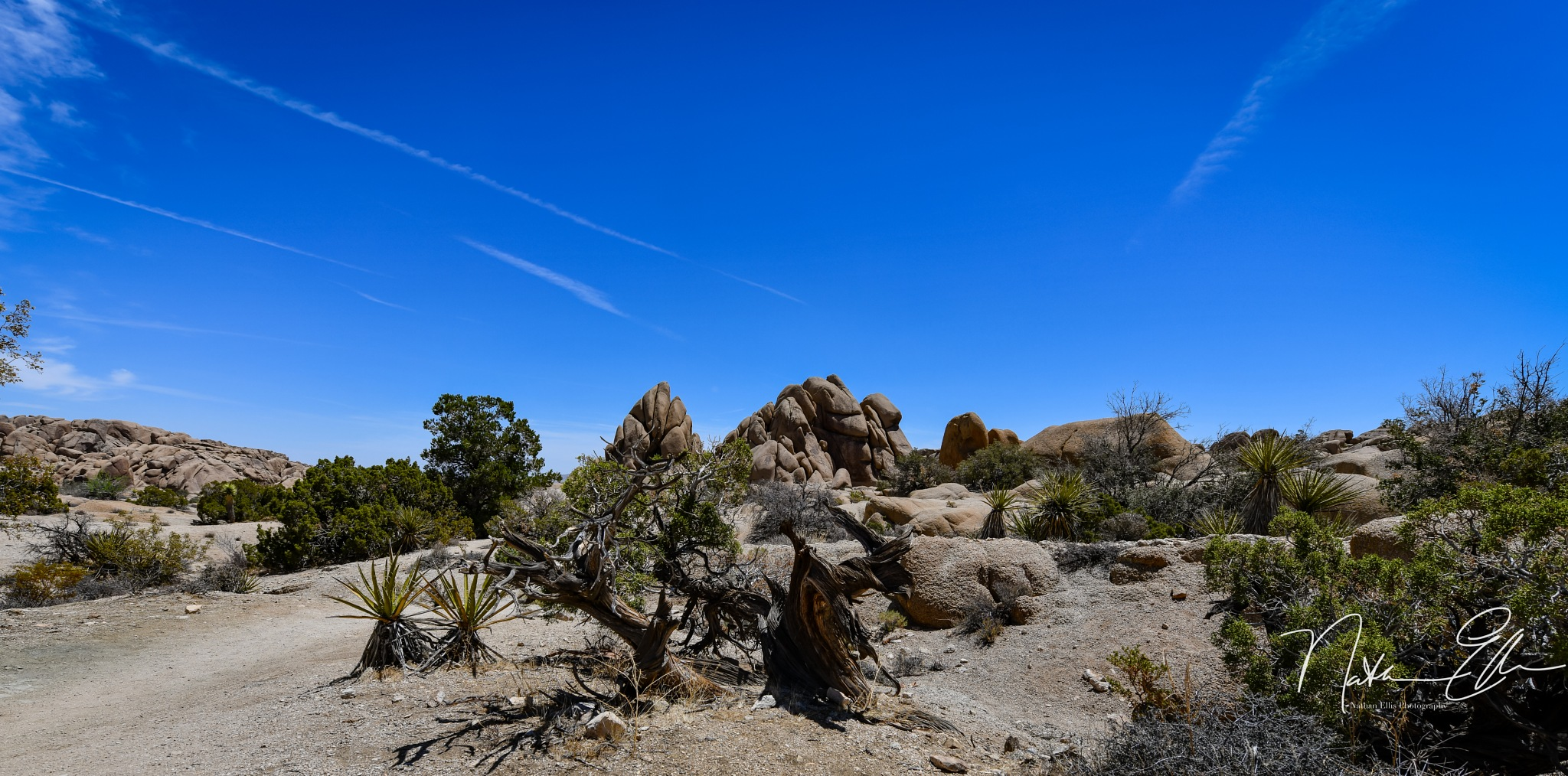 Joshua Tree by Nathan Ellis