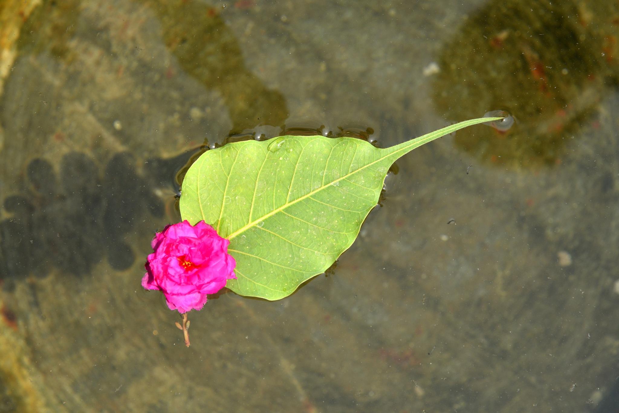FLOATING FLOWER...... by Balwant Singh