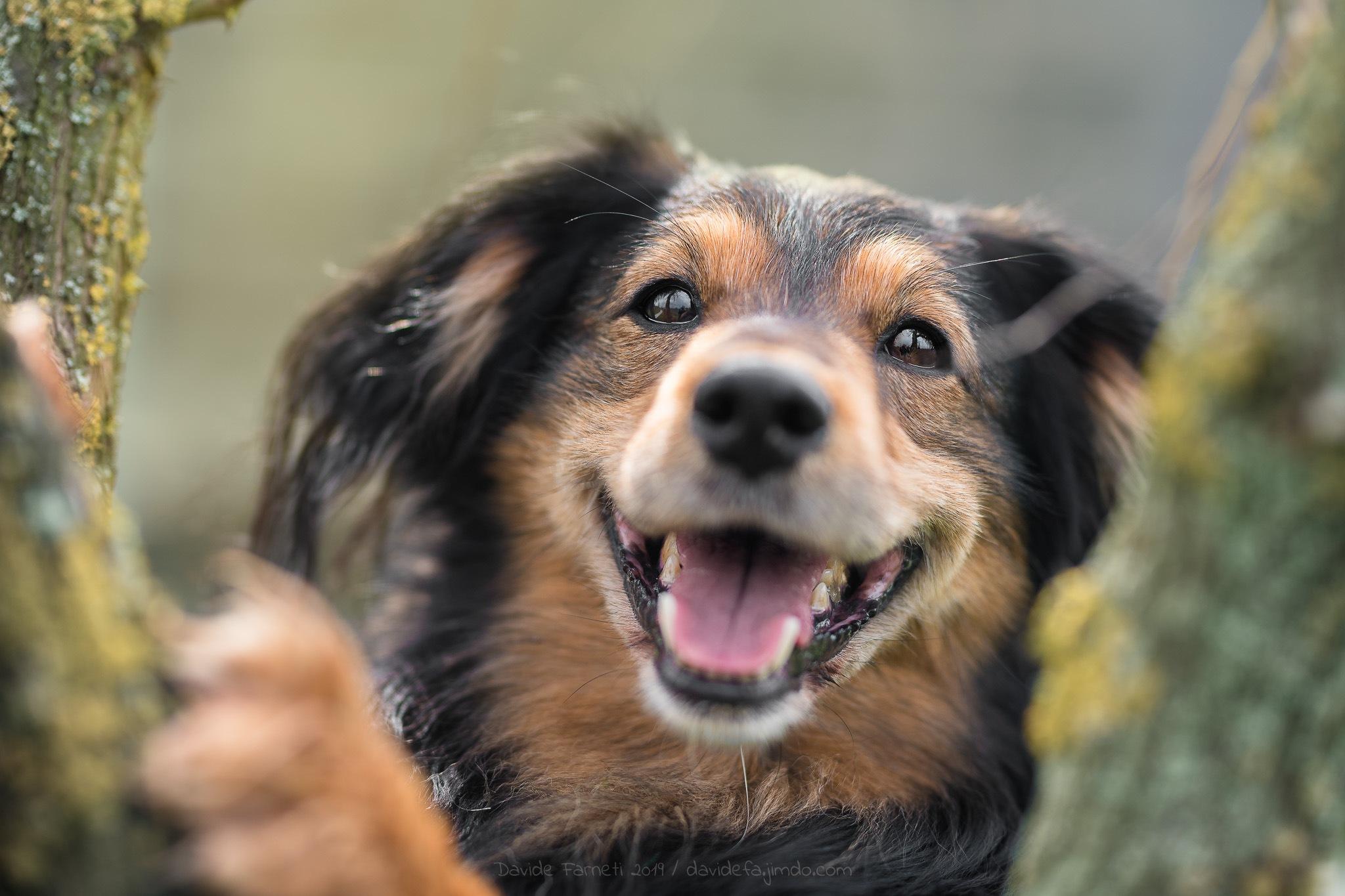 Photo in Animal #dog #cane #meticcio #mestizo #albero #tree #sorriso #smile