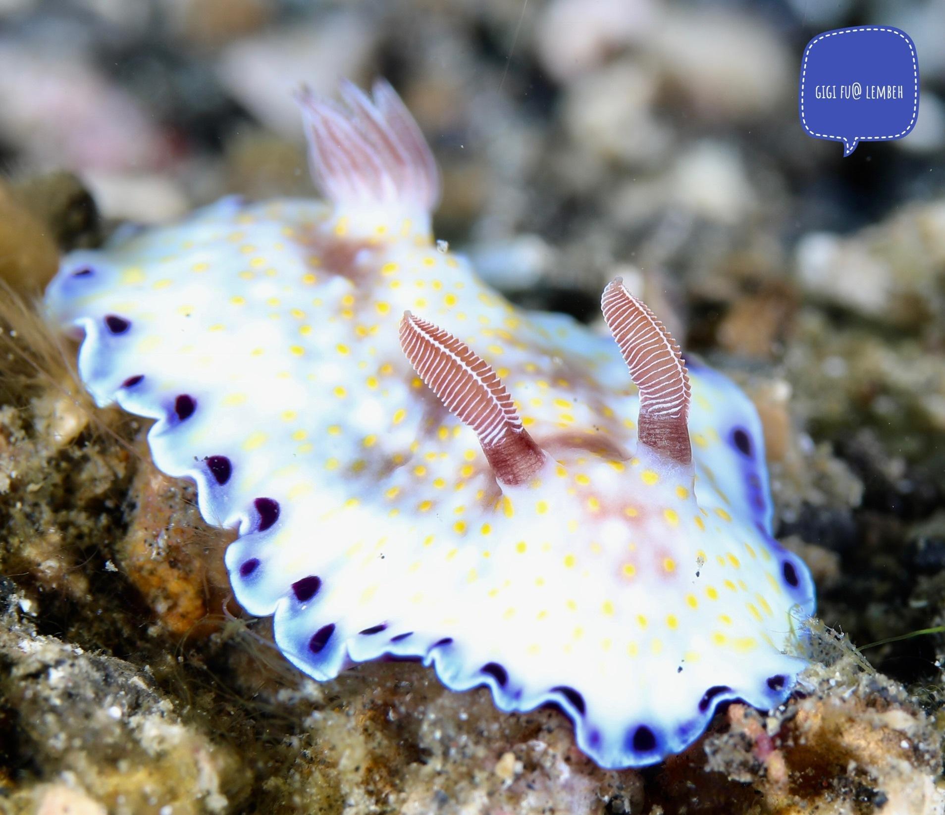 Nudibranch  by Gigi Fu