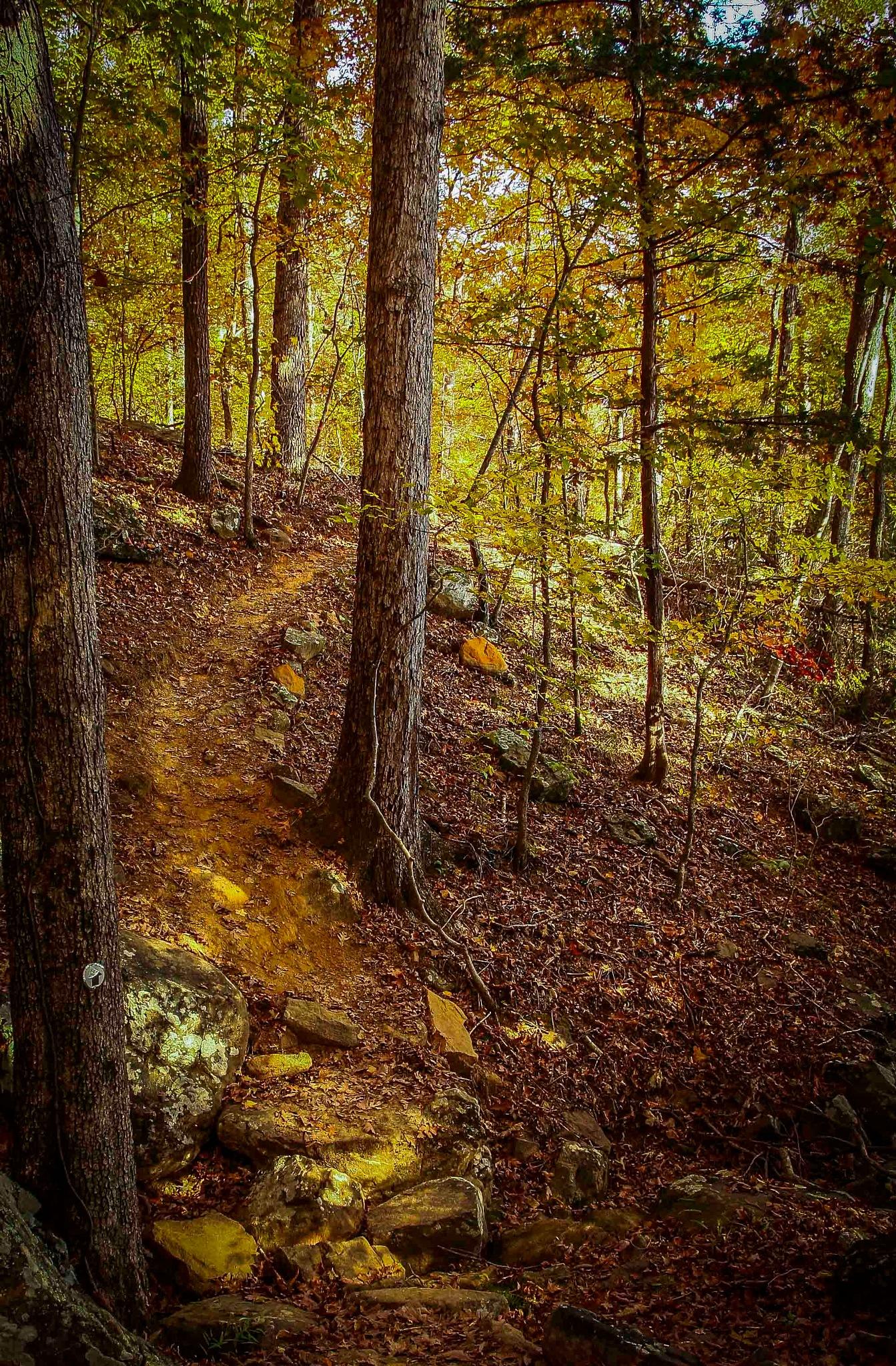 Ozark Highlands Trail by Razorsharp