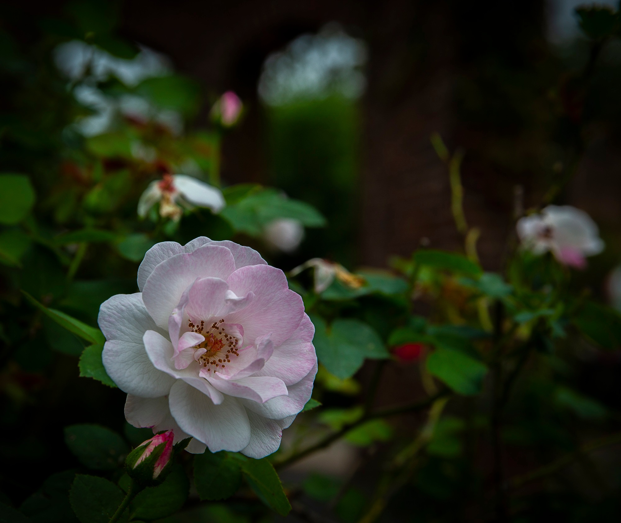A Rose By Any Other Name by Razorsharp