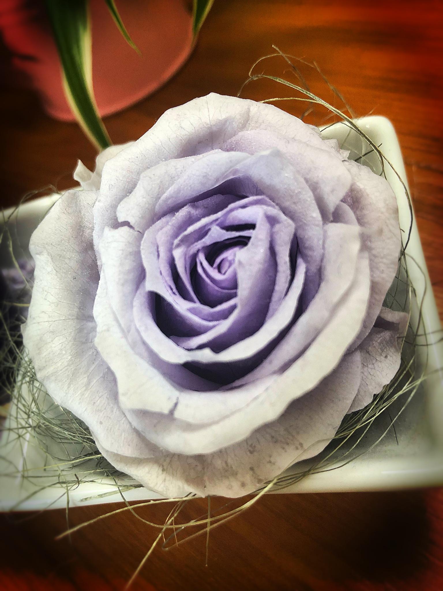Degraded purple  by Charlotte Lebrun
