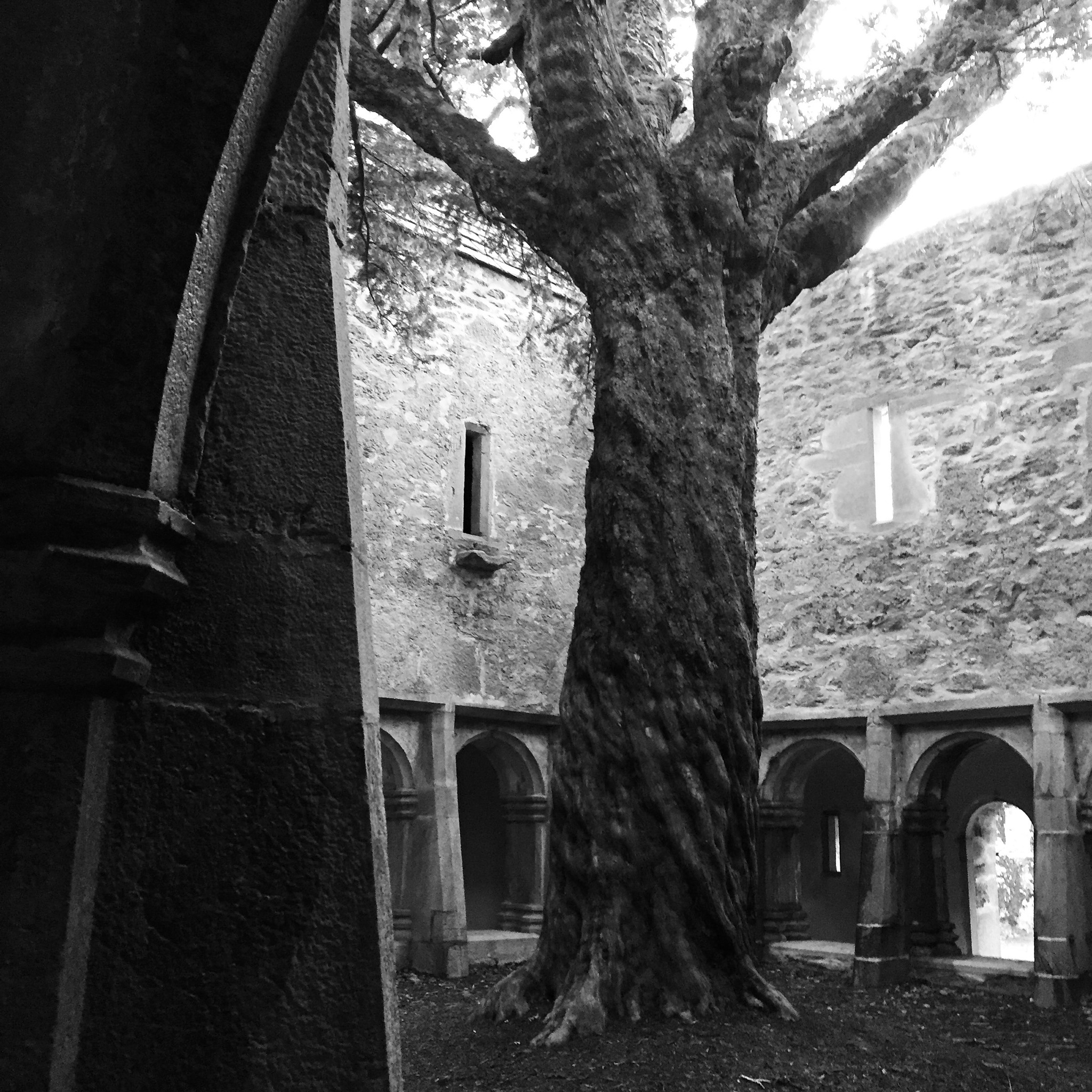 Cloisters by Nick Woodards