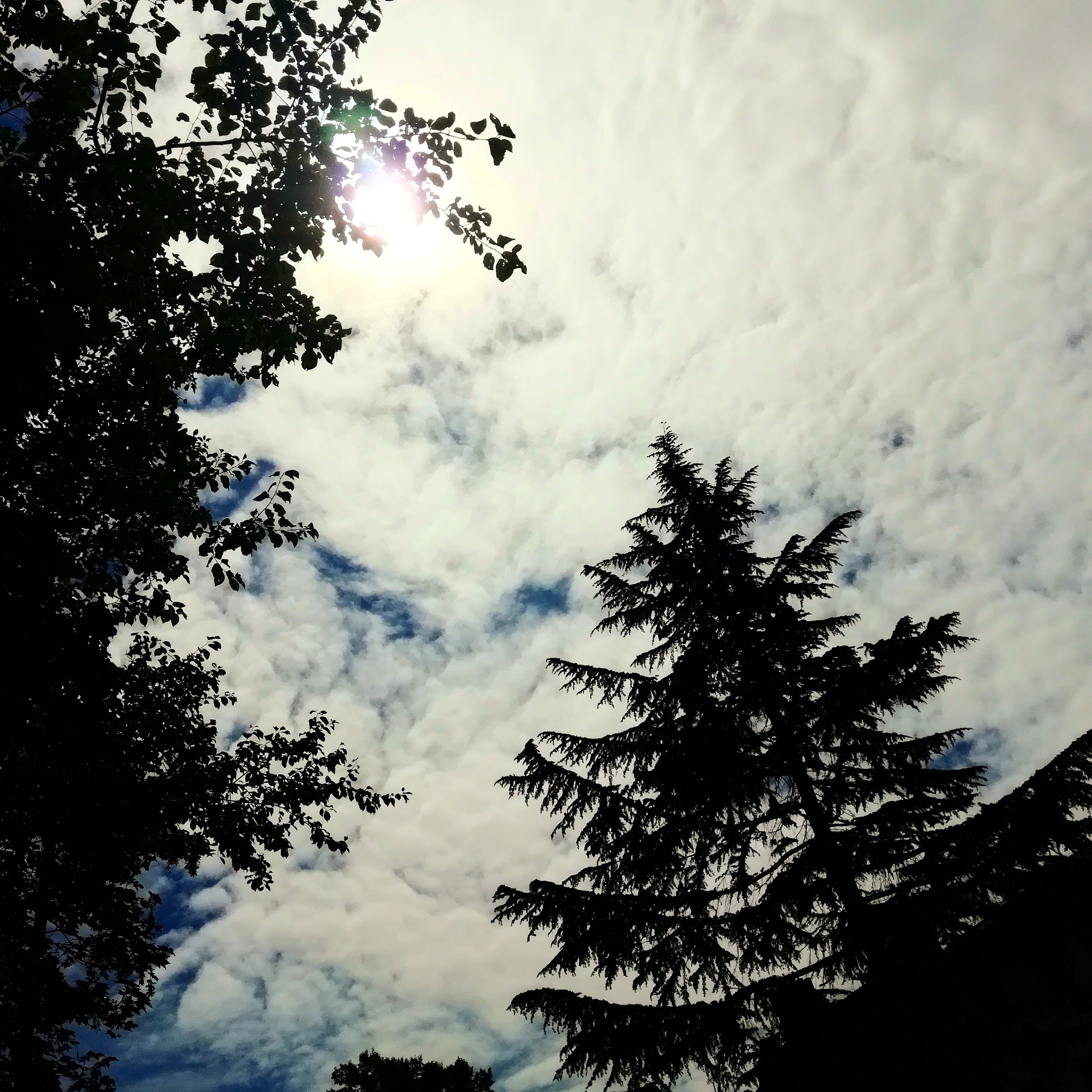 Sky & Trees  by CAPTURES
