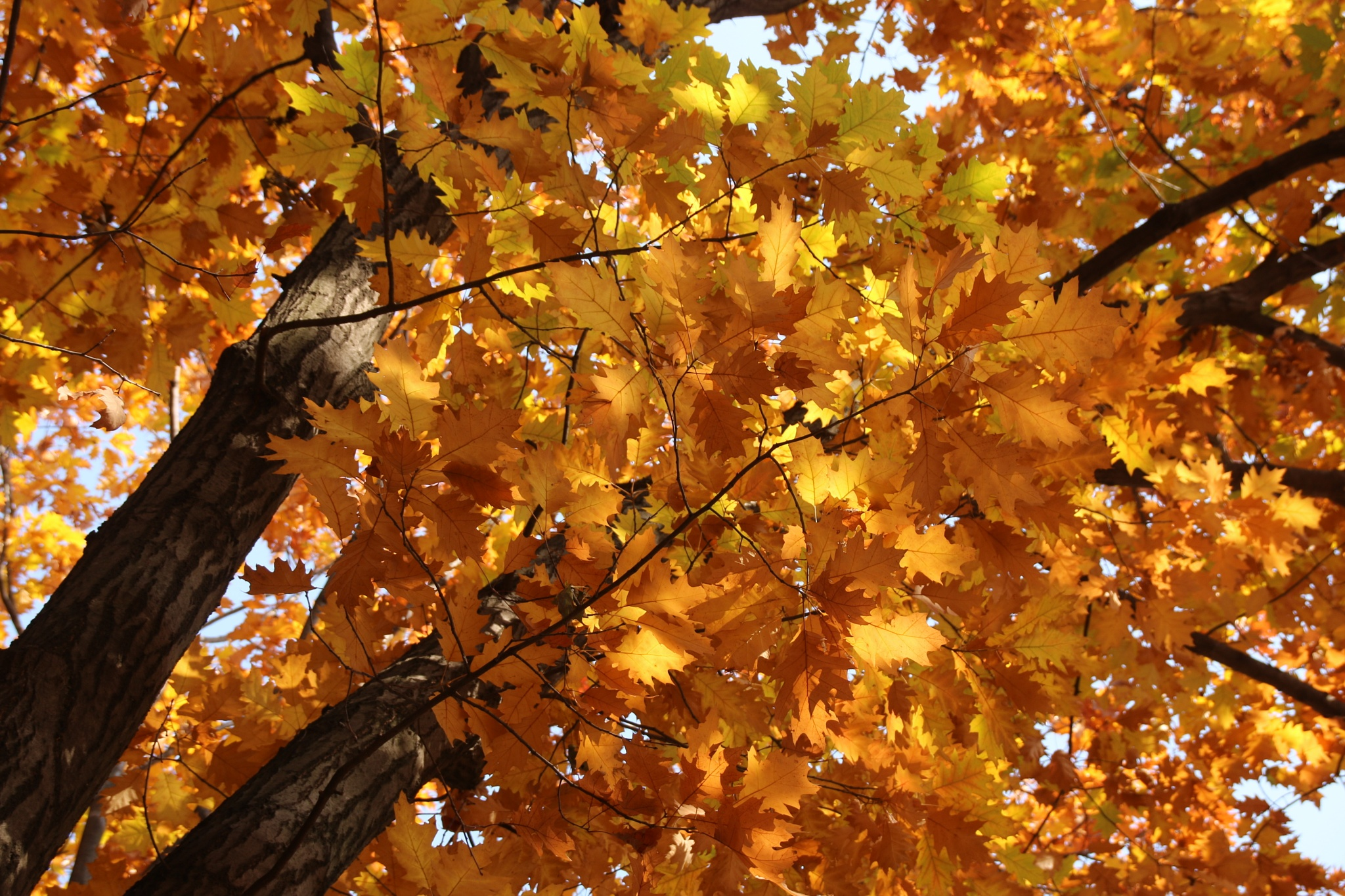 Fall by Luana Popa