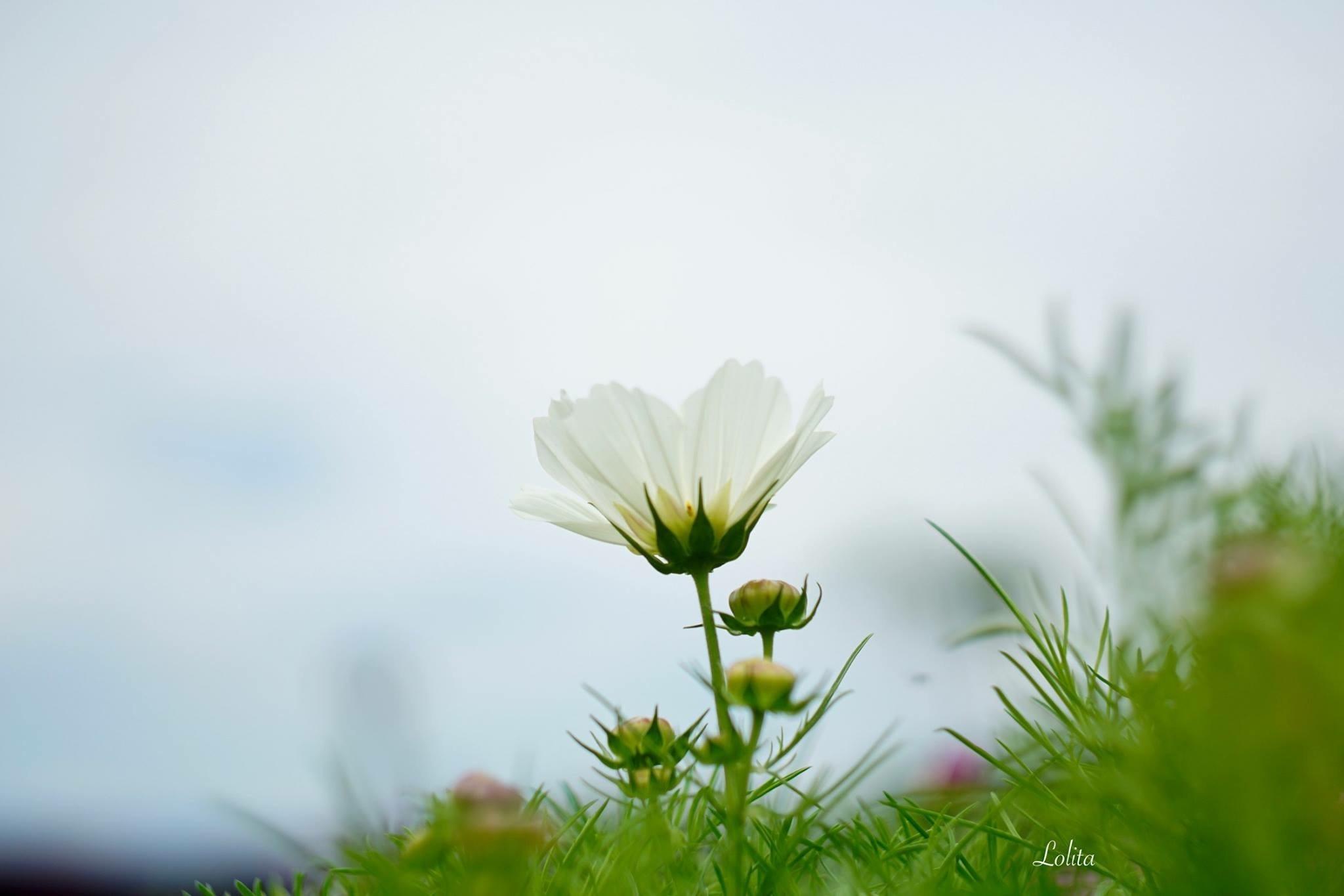 Dreamy by Inamorata