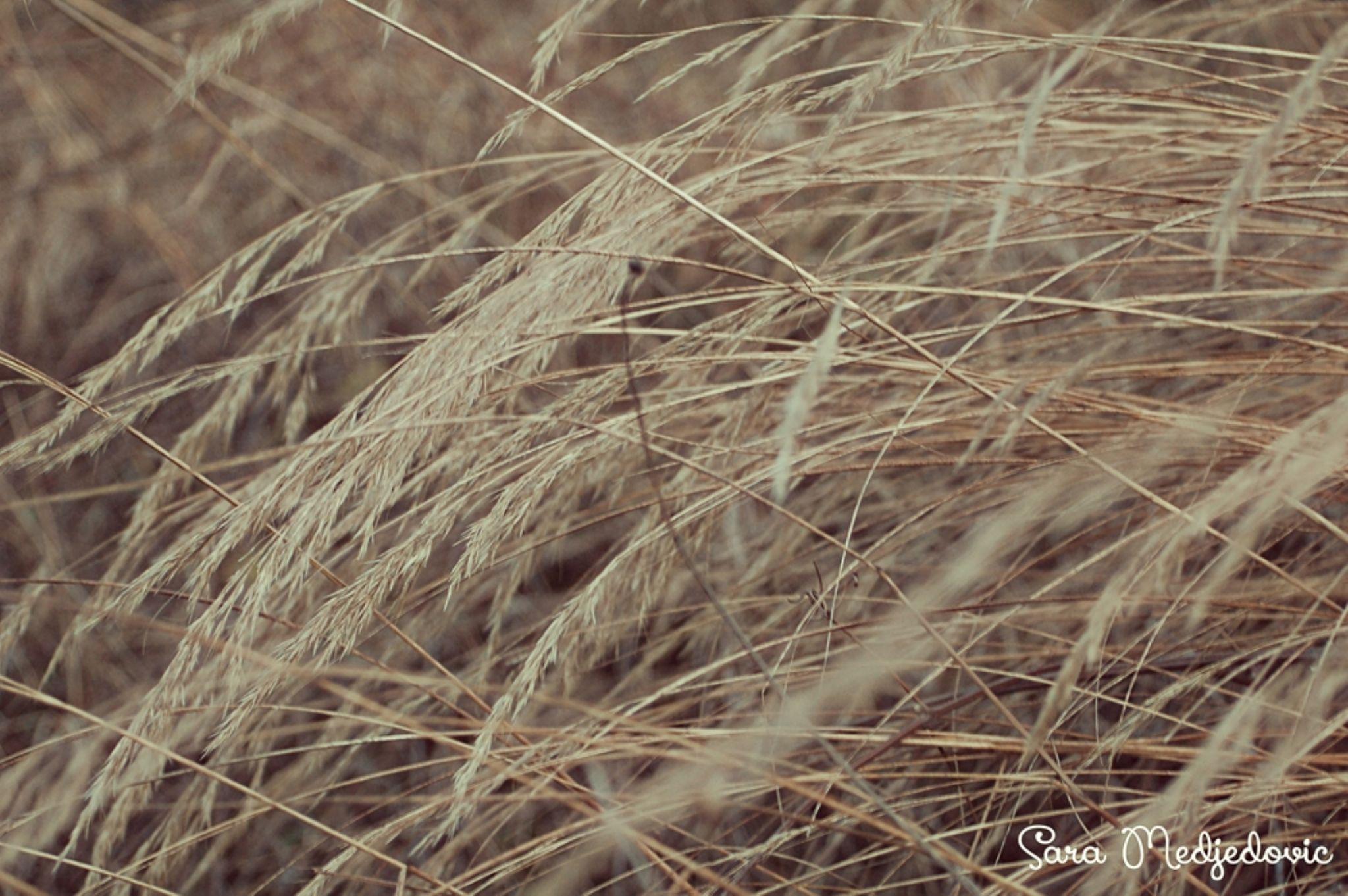 Grass. by Sara Medjedovic
